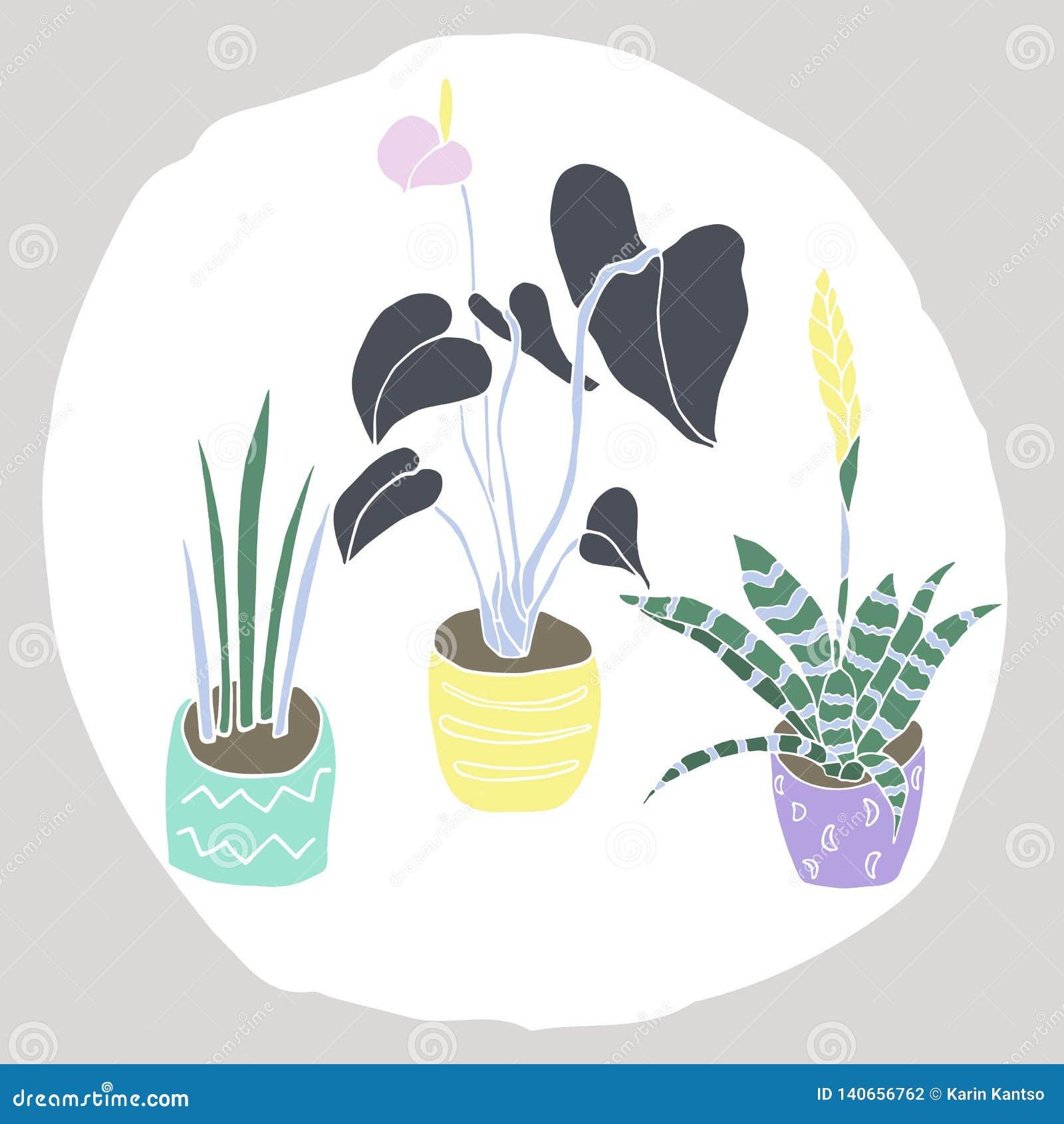 Dom rośliny ustawiać