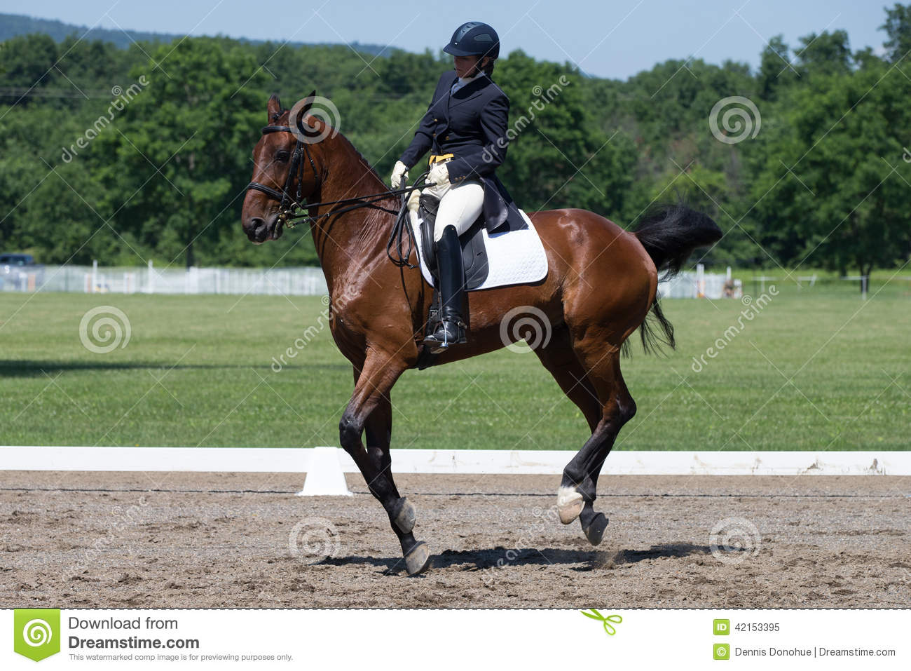 Doma FEI Prix St Georges