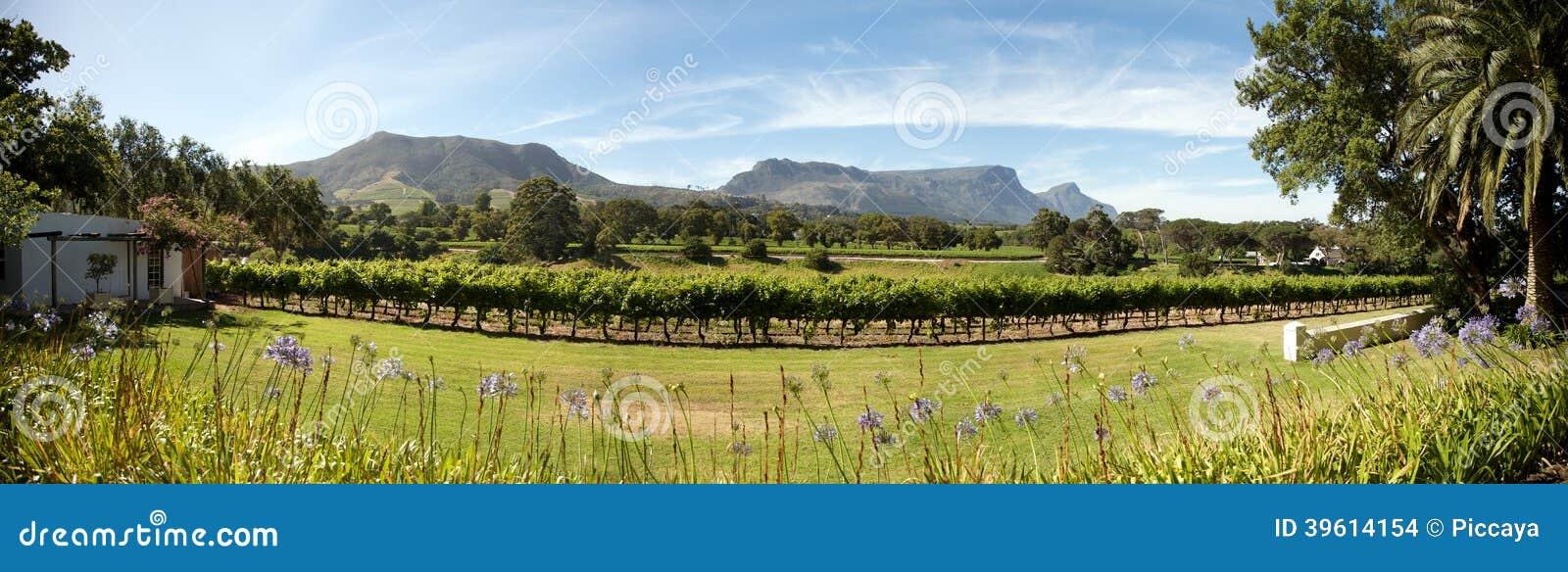 Domaine de vin à Cape Town