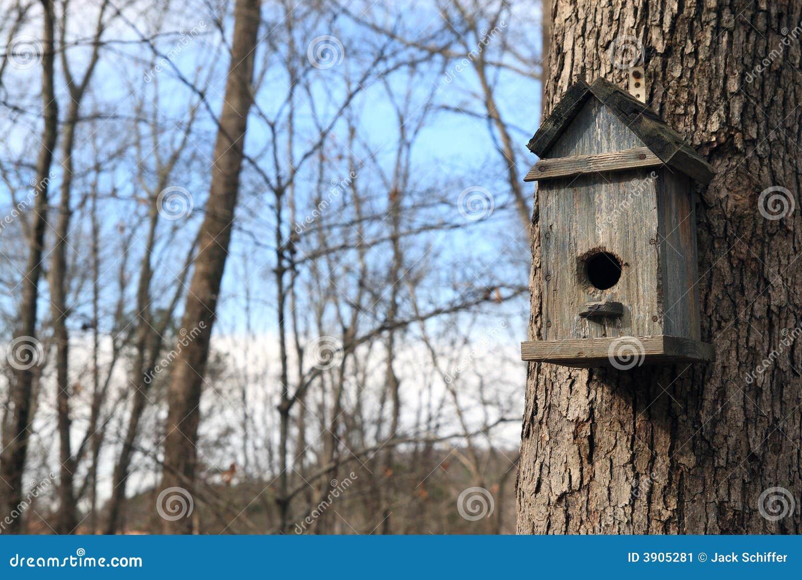 Domekdla ptaków