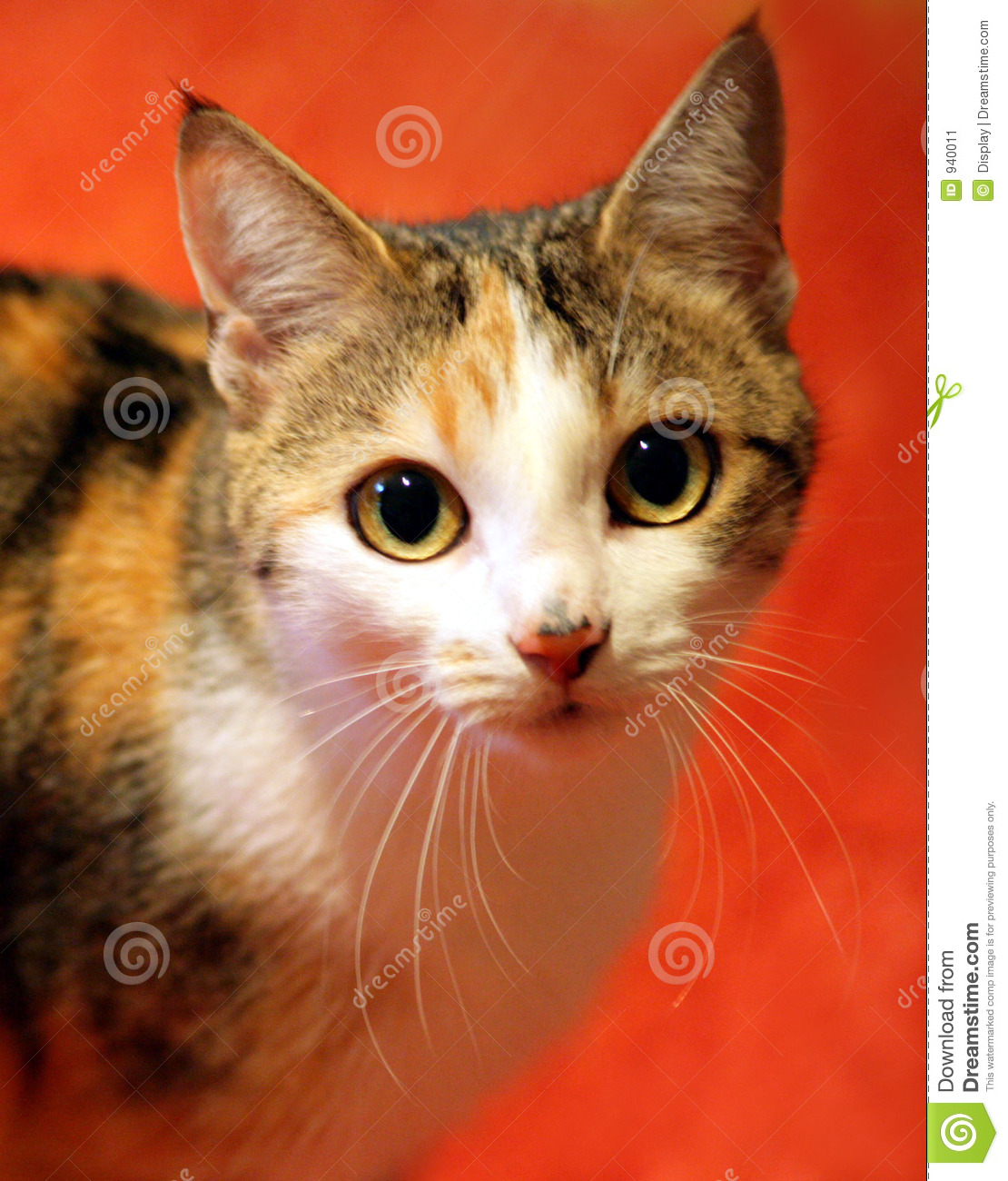 Domestic Cat On A Red Carpet Stock Image