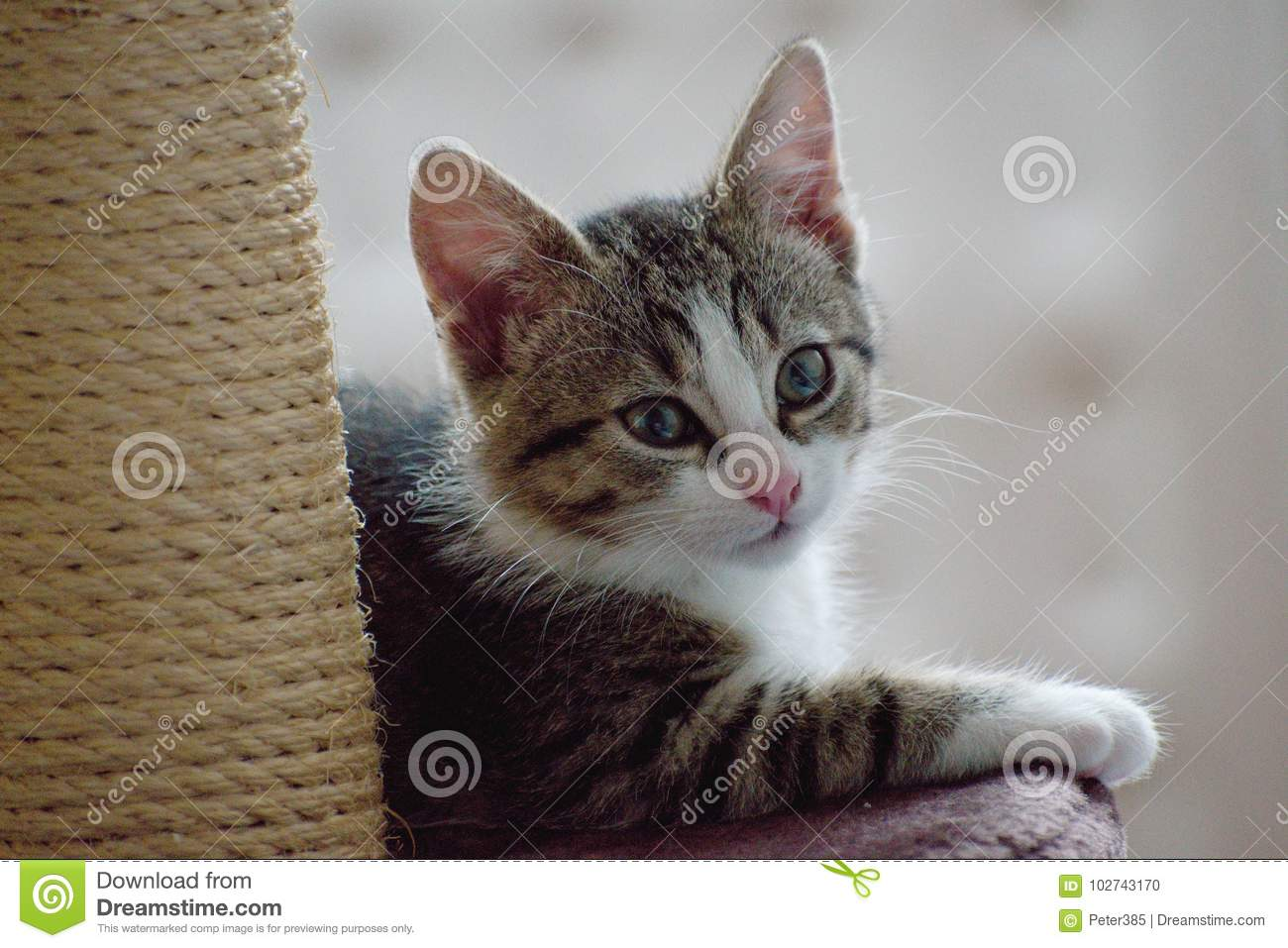 Download The domestic cat stock photo. Image of kitten, young - 102743170