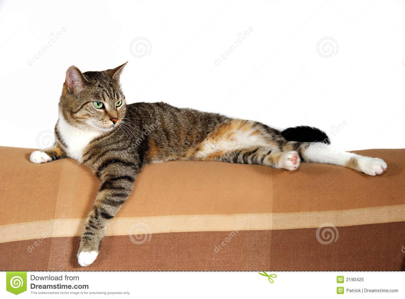 ... of a beautiful domestic house cat on the sofa, white background