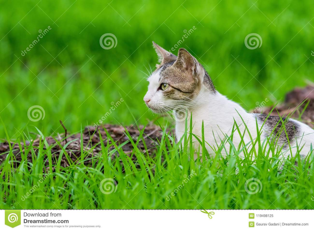 Wild cat waiting in grass covered field