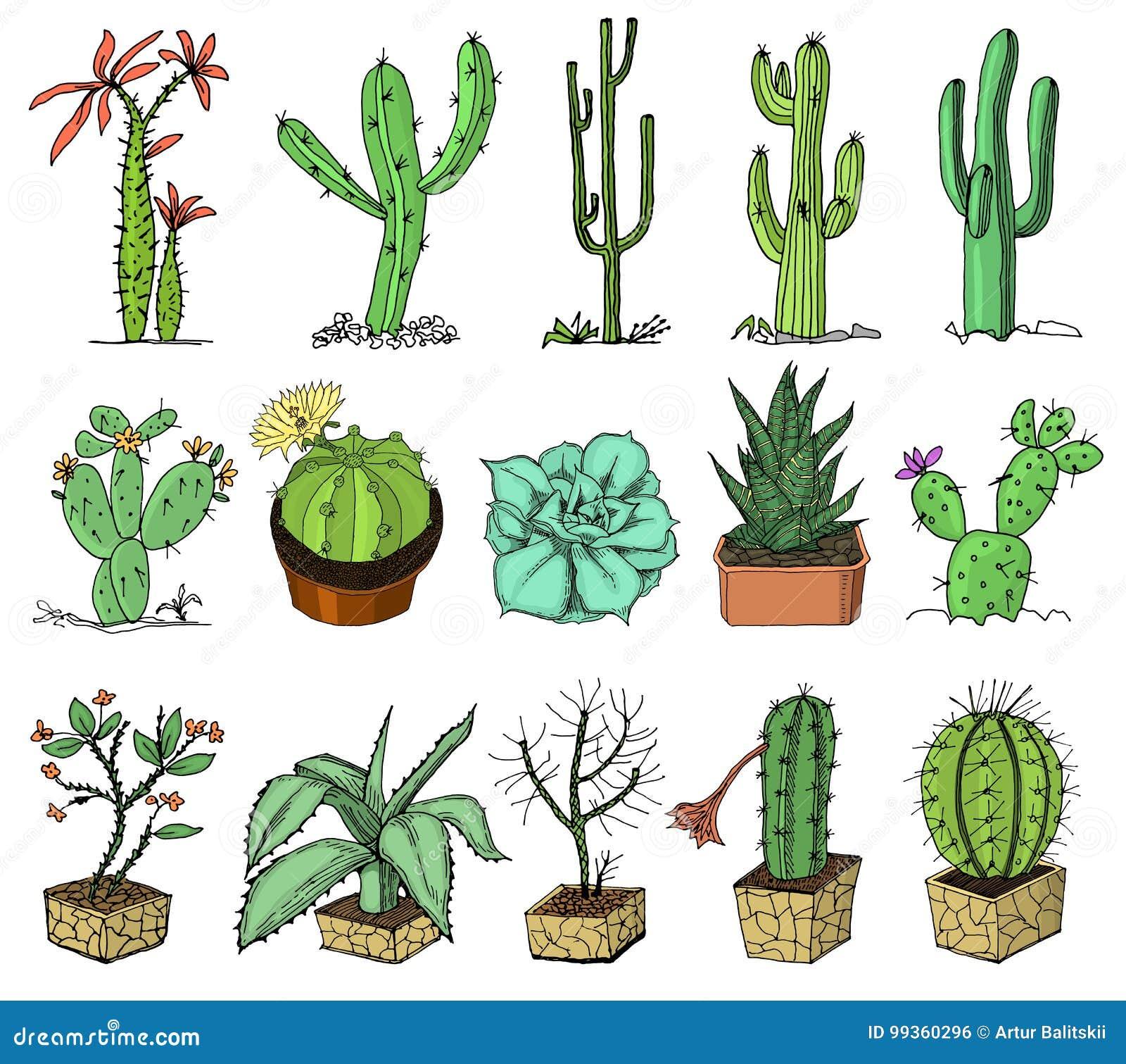 Domowe Kaktus Rośliny Z Kwiatami I Z Prickles I Natura Elementami W Garnkach Egzotyczny Lub Tropikalny Kolekcja Różnorodny Ilustracja Wektor Ilustracja Złożonej Z Botaniczny Botanika 99360296