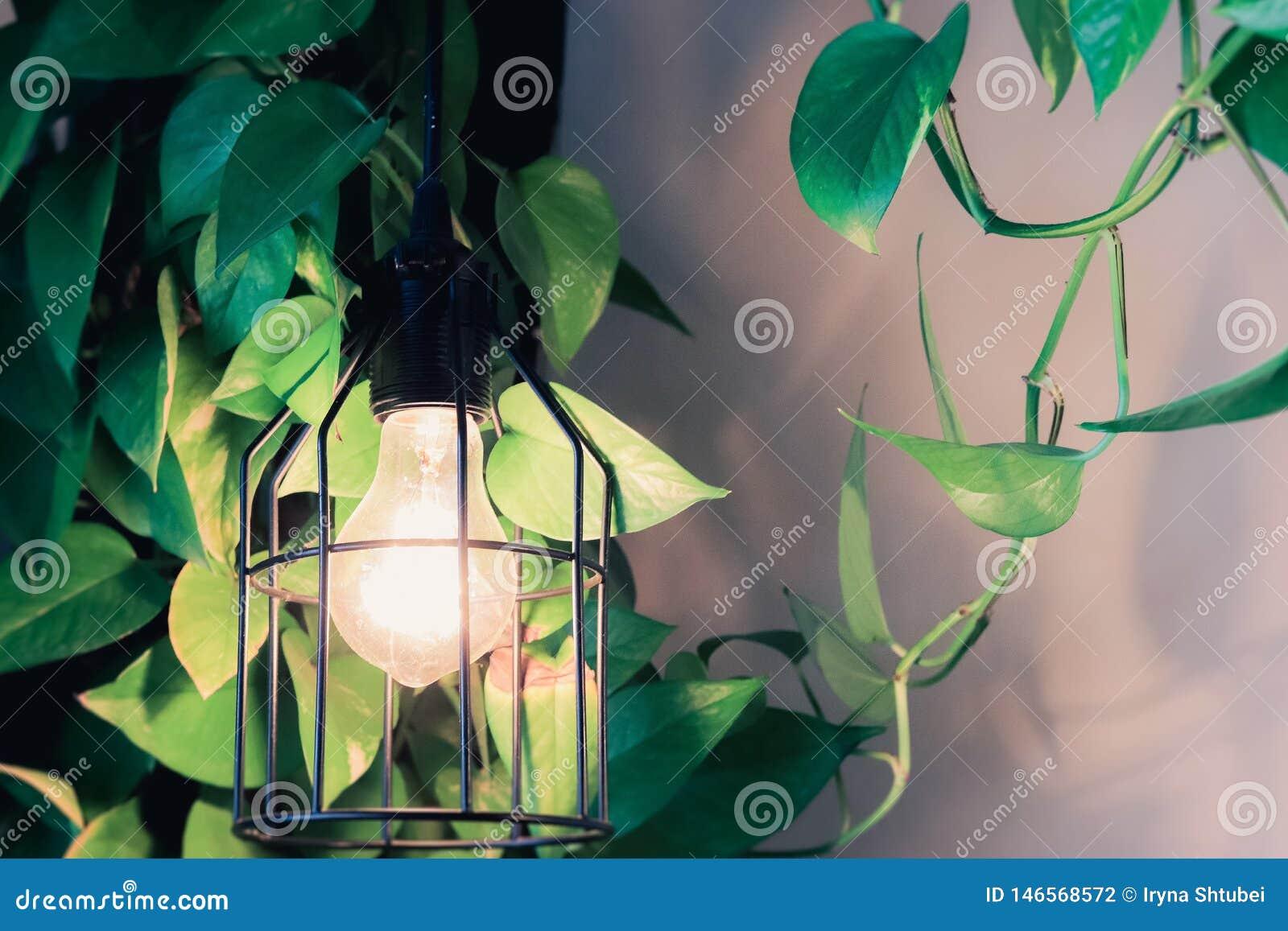 Domowej dekoracji botaniczny styl