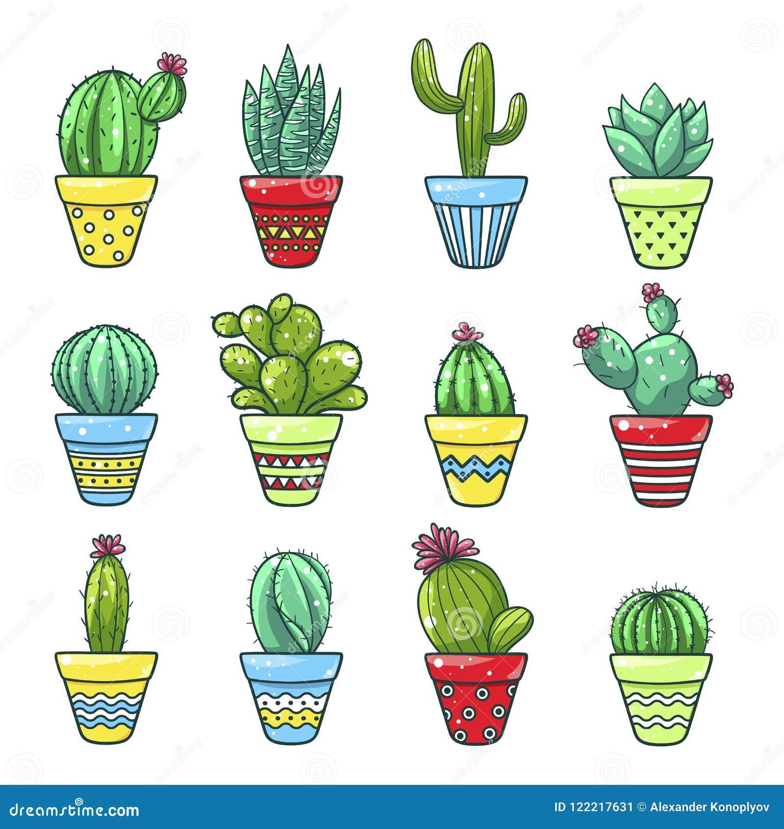 Domowy kaktusa set