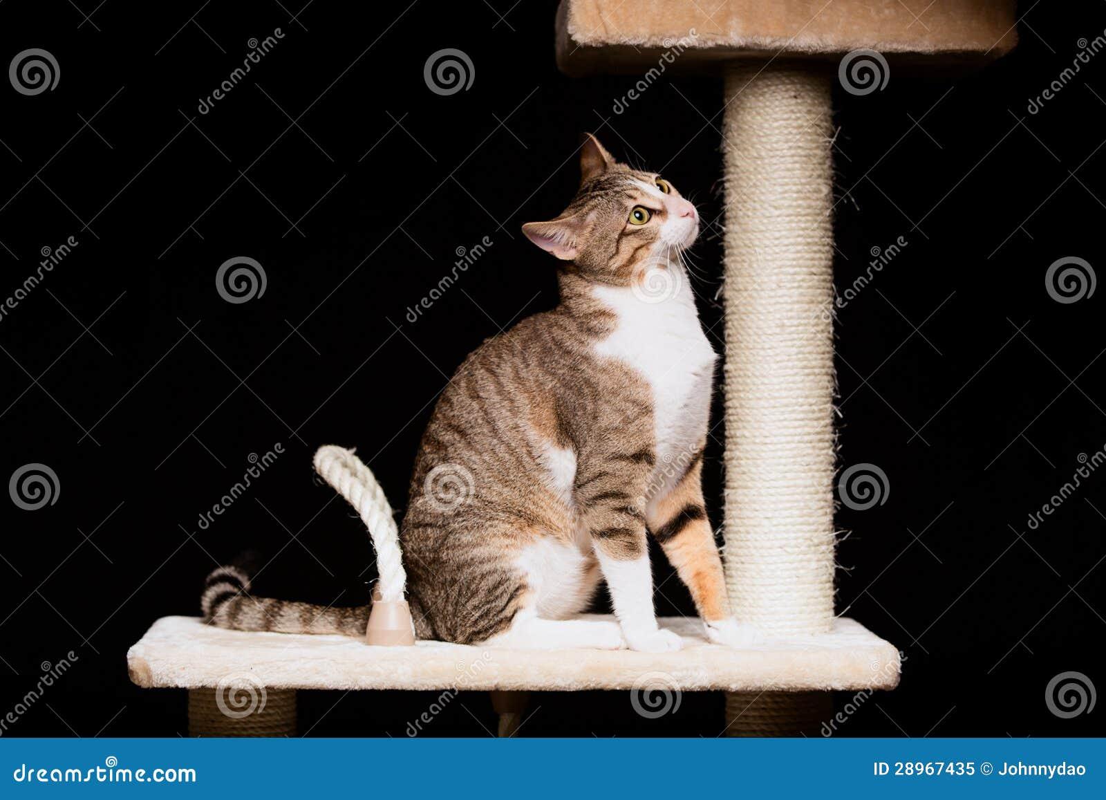 Domowy kot na kota drzewie