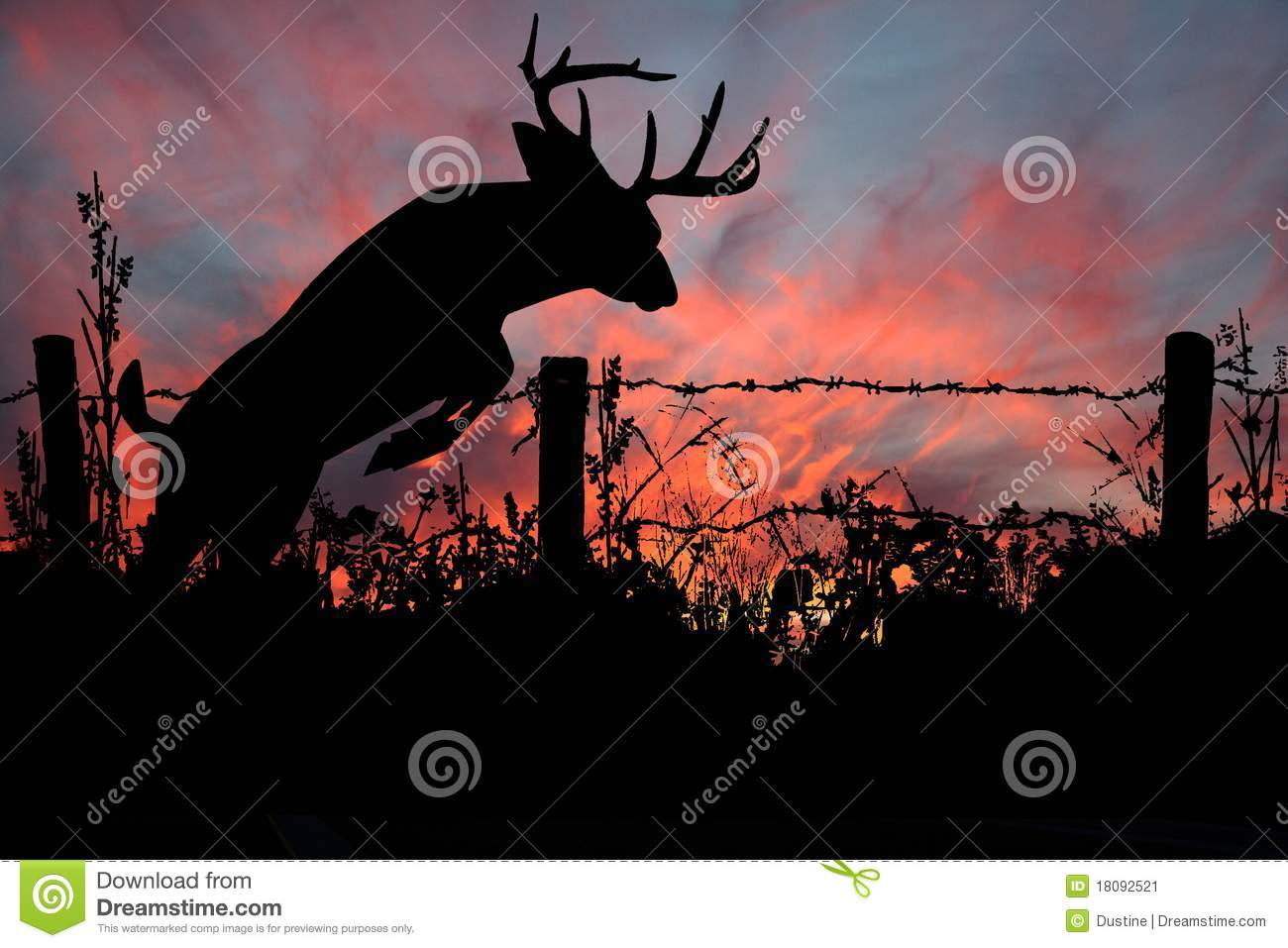 Don T Fence Me In White Tail Buck Stock Image Image Of Rack Rural 18092521