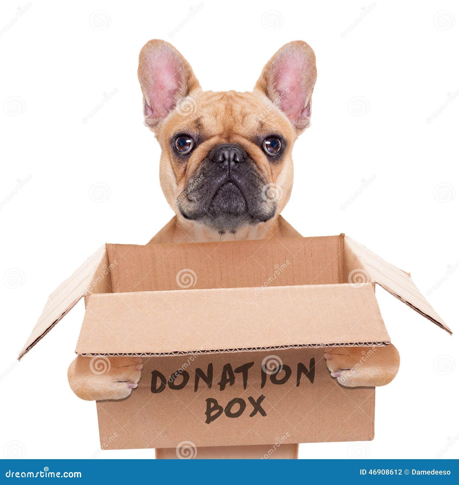 Donation box dog