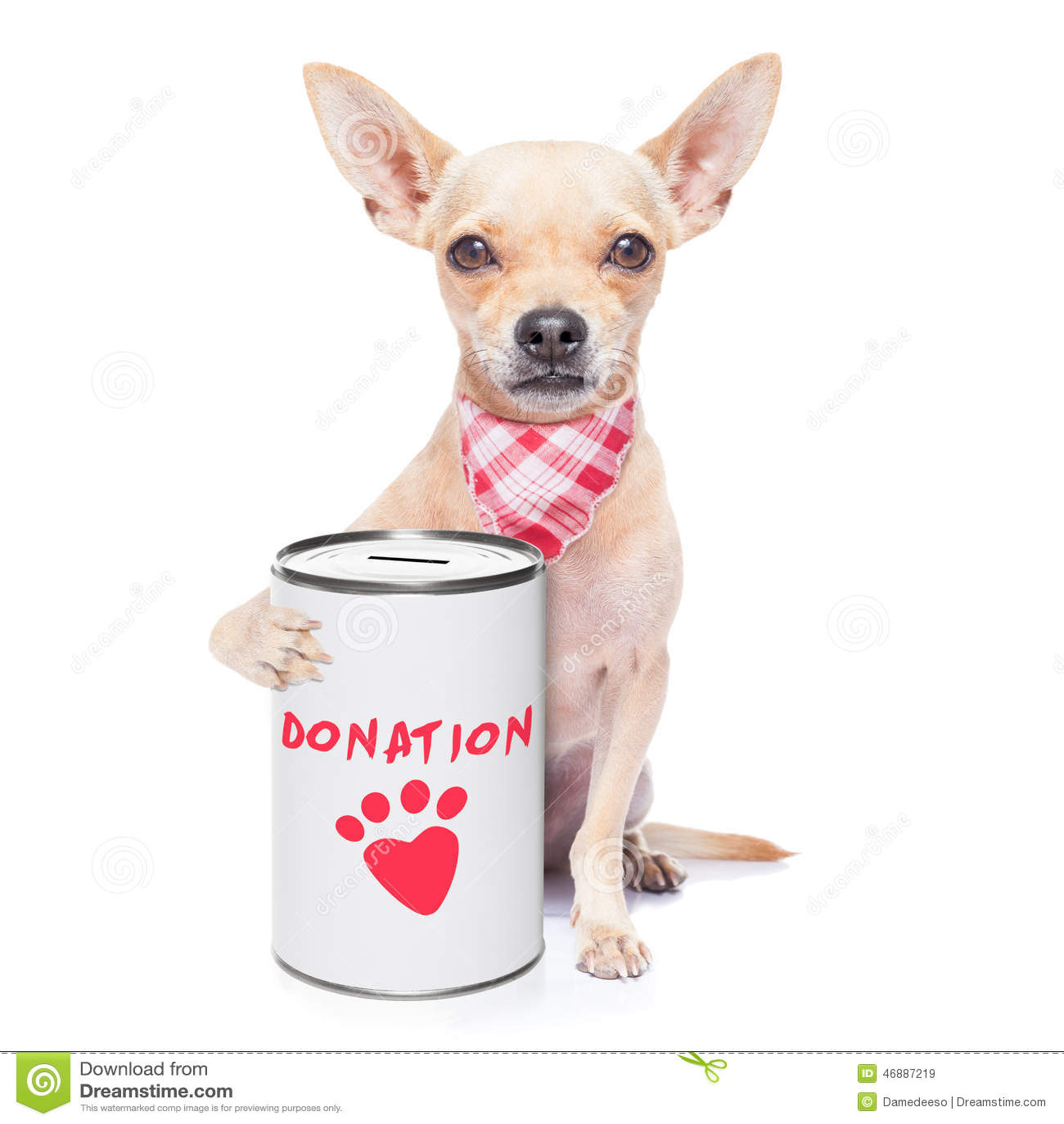 donation dog stock photo   image 46887219
