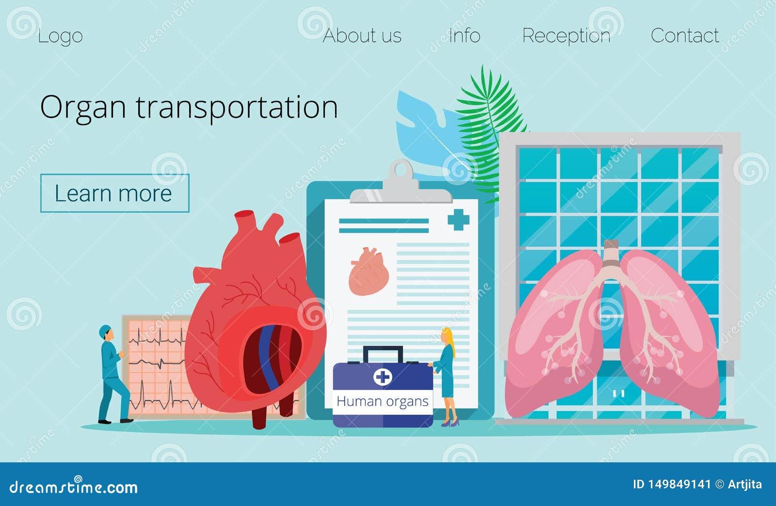 Donatore di organo umano in buona salute
