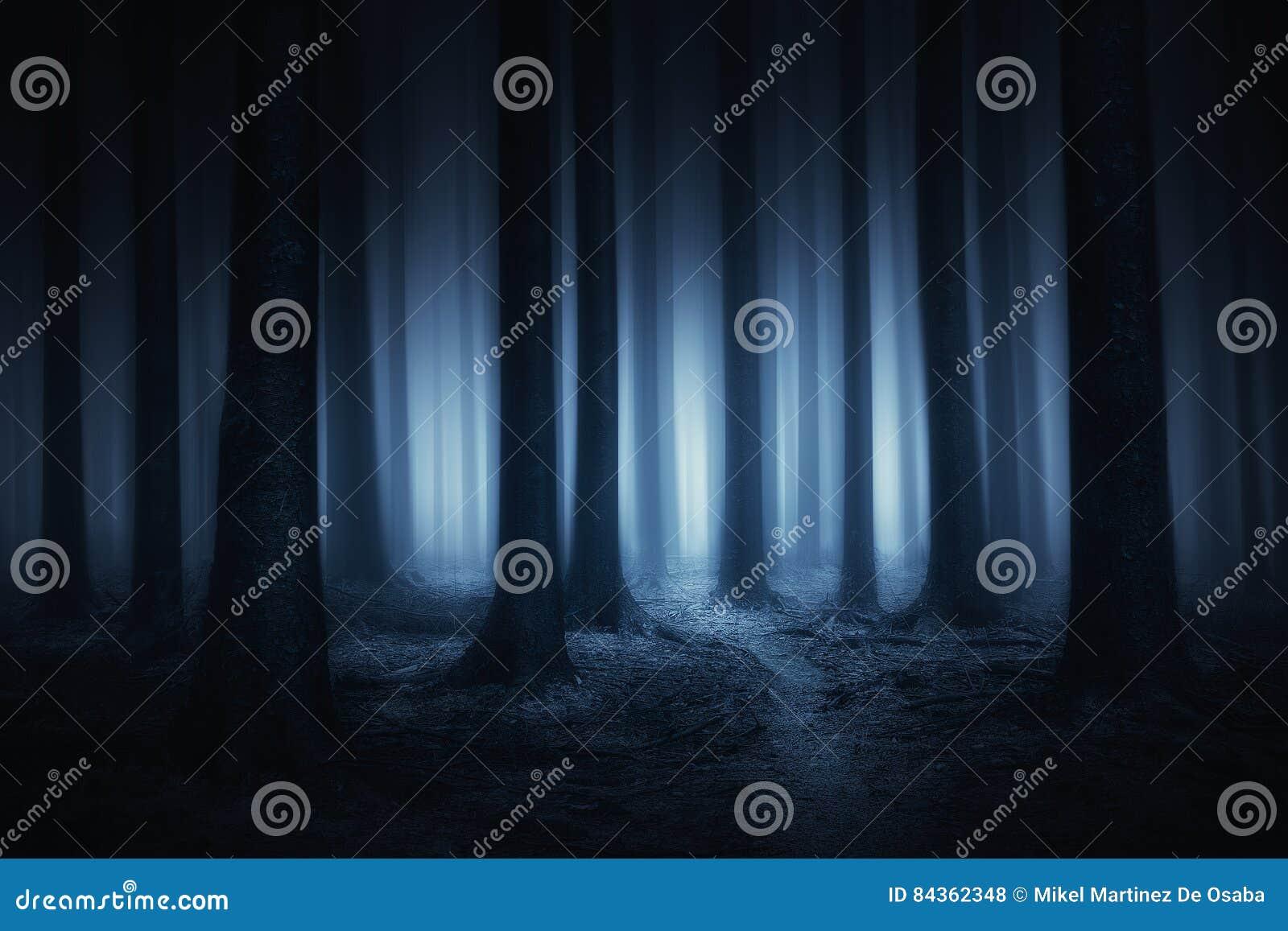 Donker en eng bos bij nacht