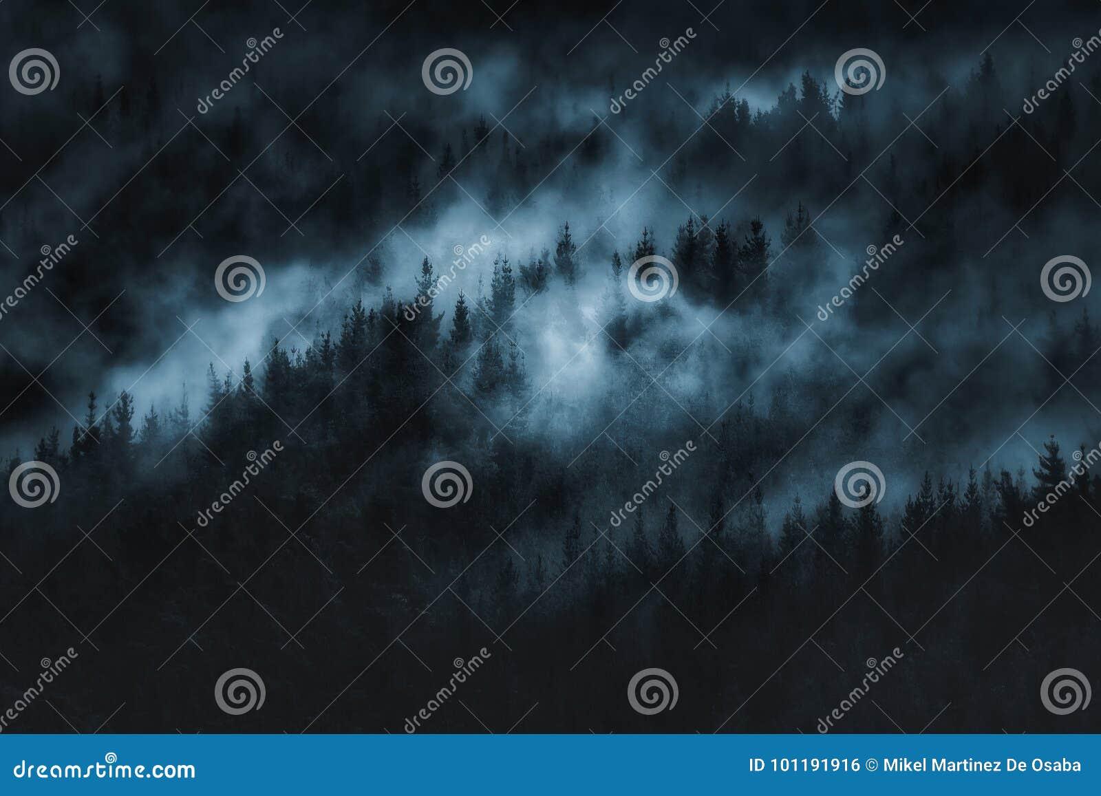 Donker eng bos met mist