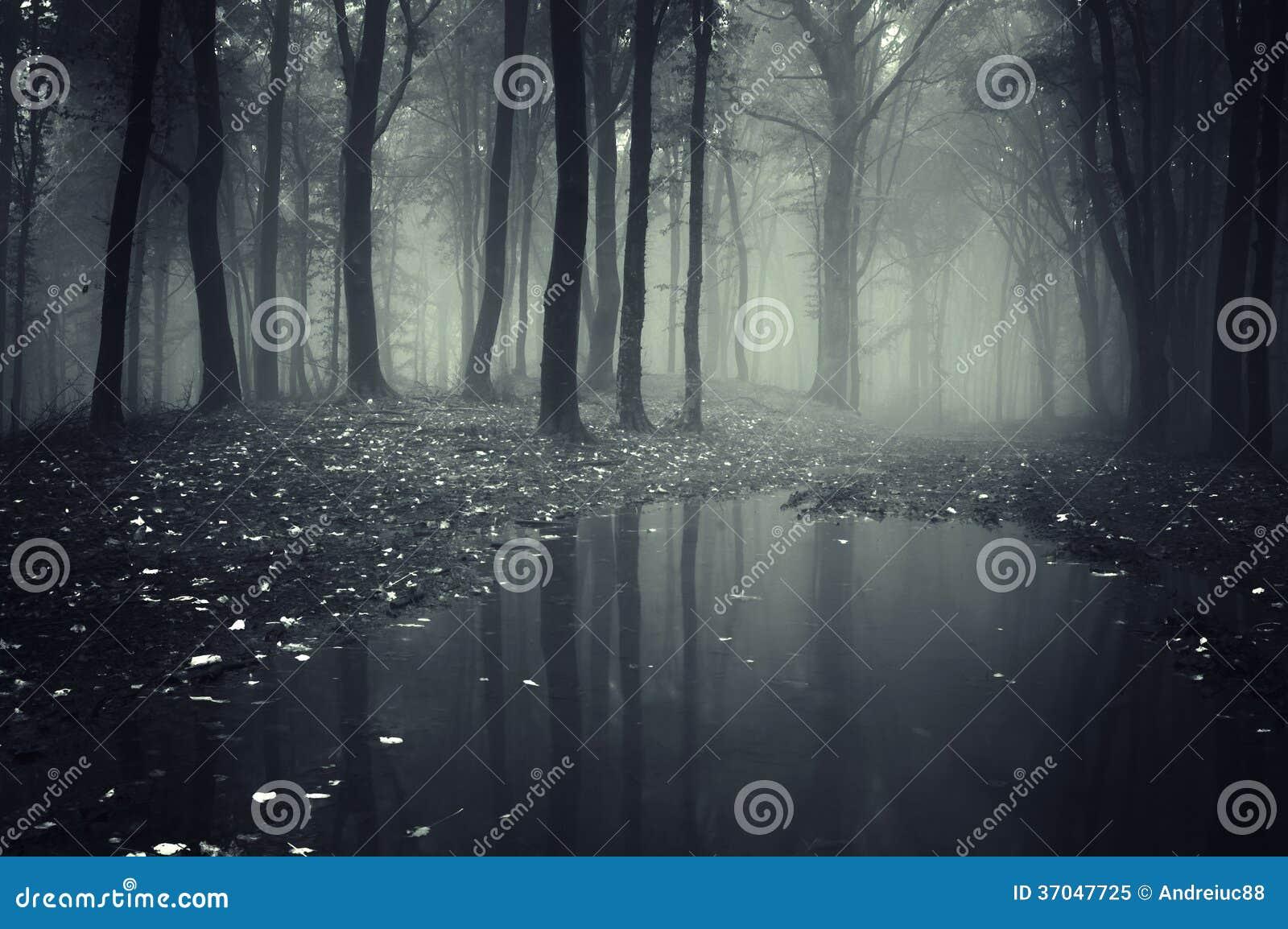 Donker griezelig bos met geheimzinnig mist en meer