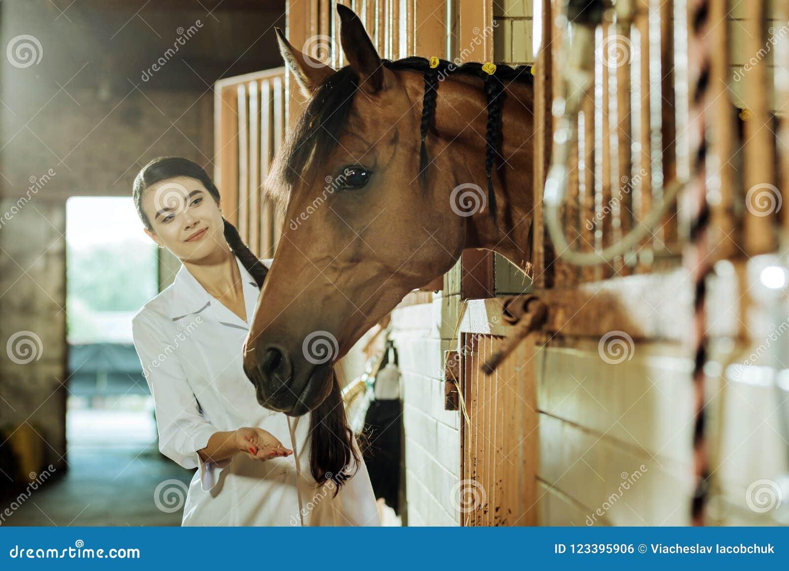 Donker-haired aantrekkelijke vrouw met lange vlecht die paard wat voedsel geven