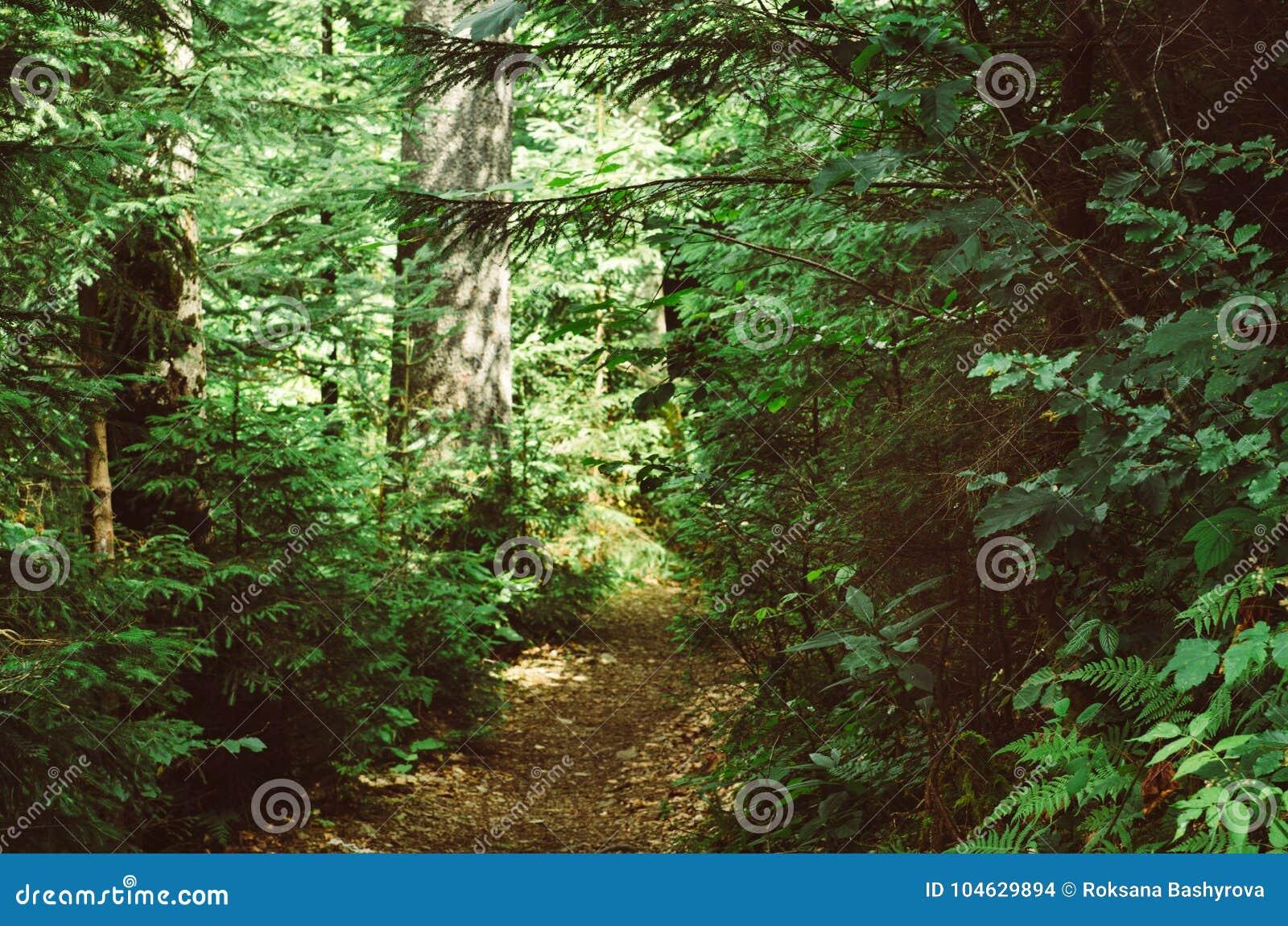 Download Donker humeurig bos stock foto. Afbeelding bestaande uit naughty - 104629894