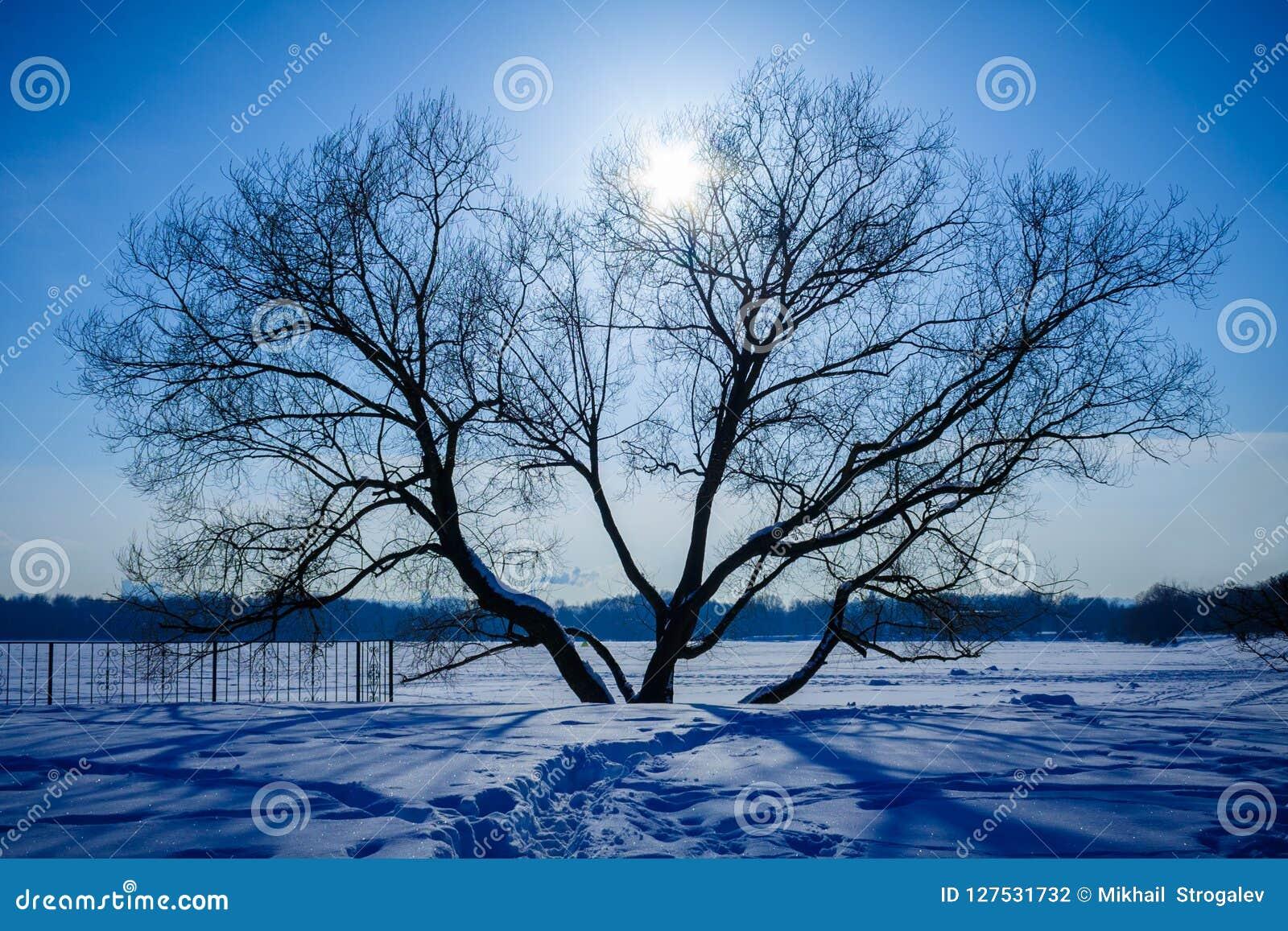 Donker silhouet van eenzame boom, tegenover een zonlicht