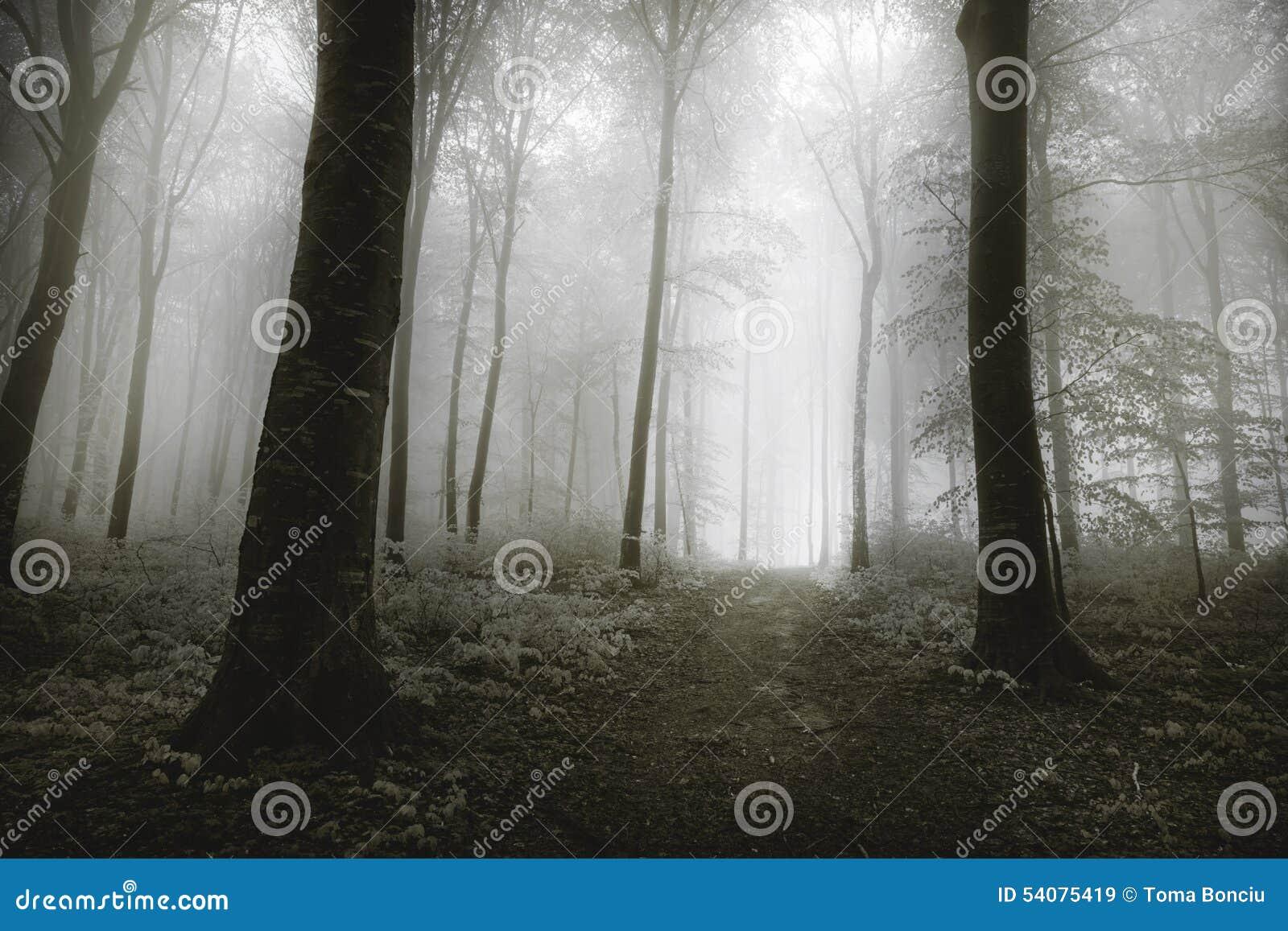 Donkere bomen met zichtbare wortels in een bos met mist