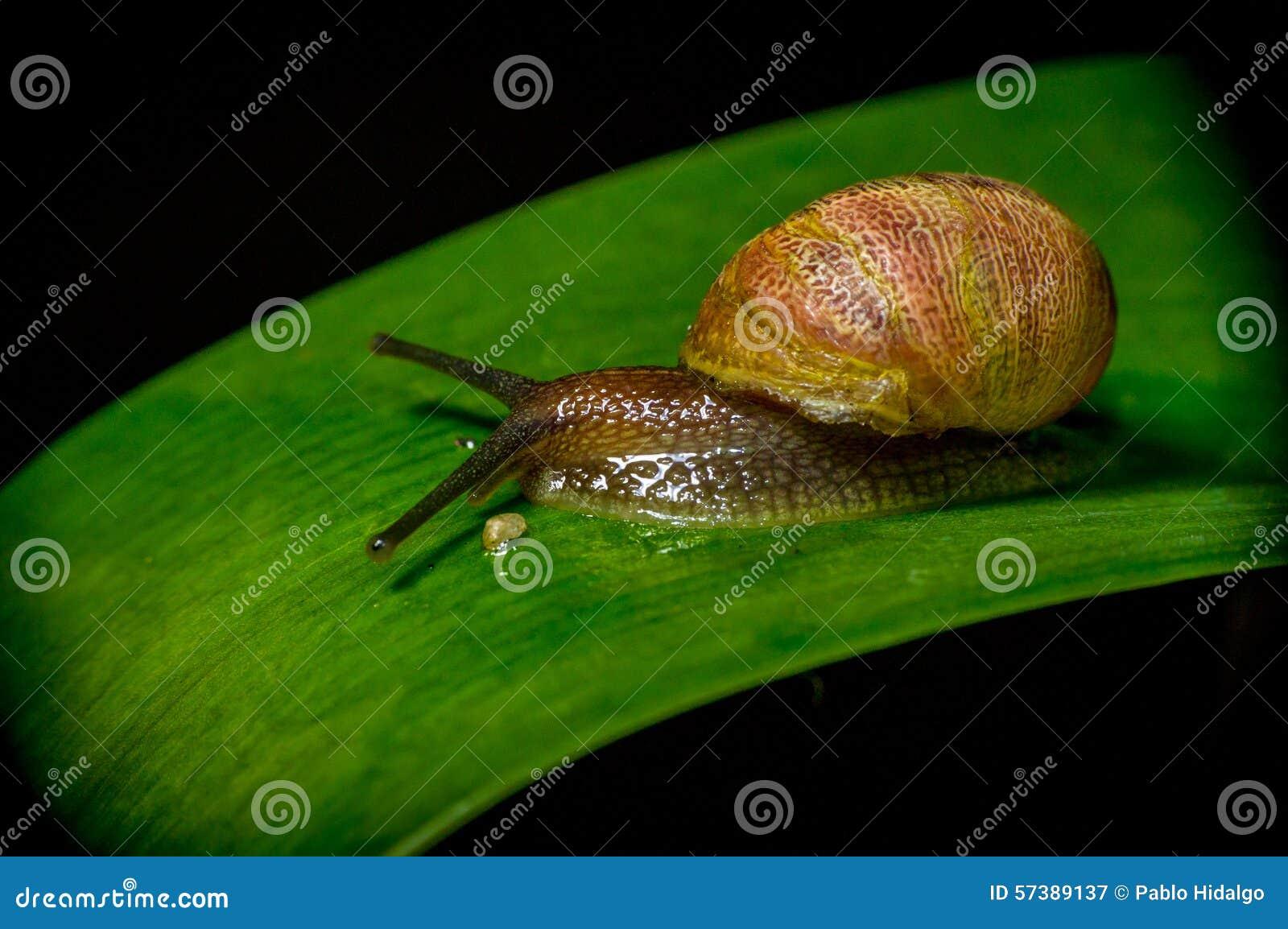Donkere gekleurde slak in aardzitting op groen