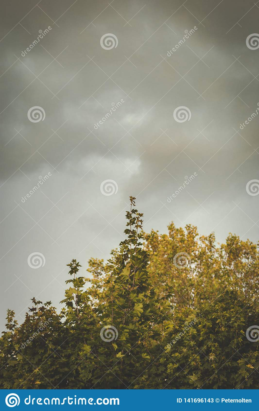 Donkere regenwolken die zich boven bomen vormen