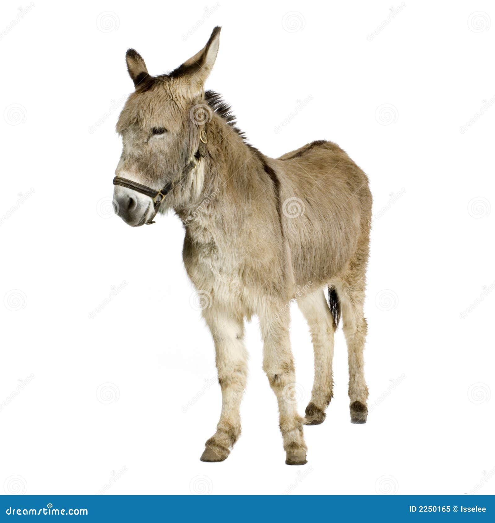 Donkey Royalty Free Stock Photo Image 2250165
