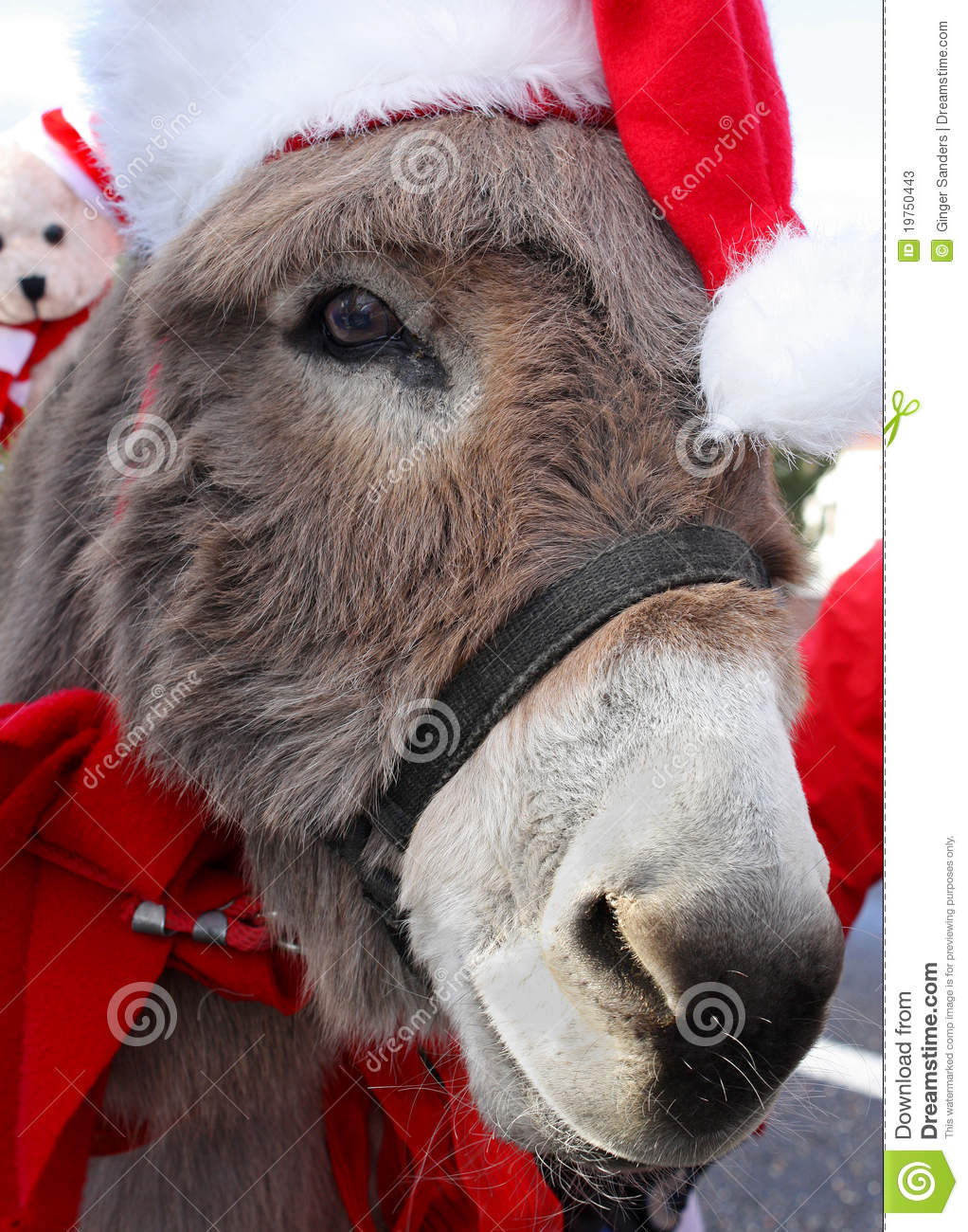 Donkey With Christmas Hat
