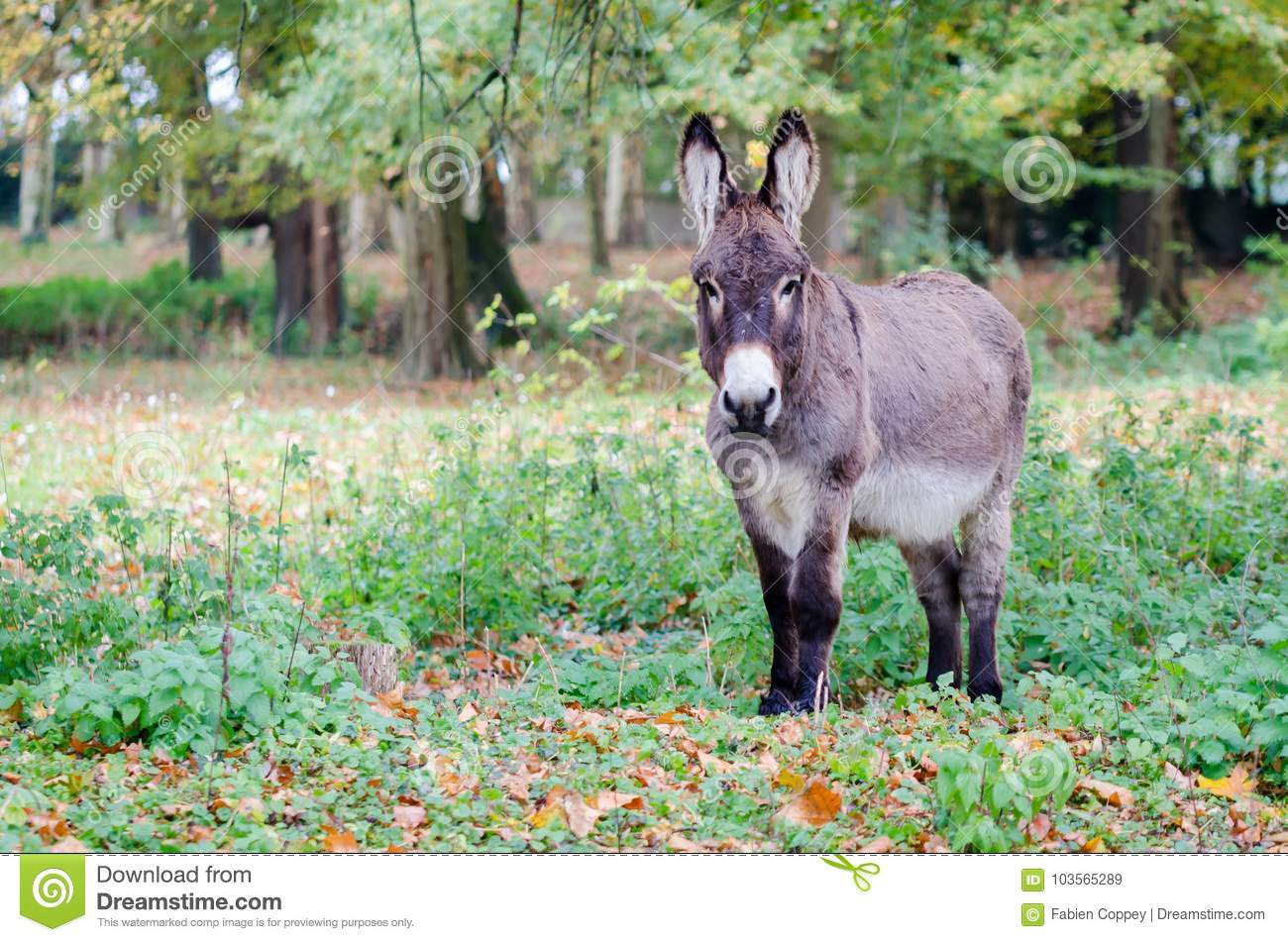 A donkey in a clearing