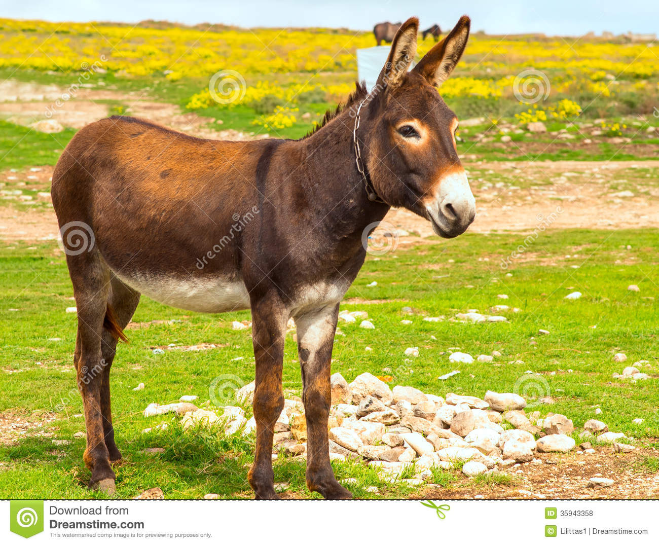 Farm donkeys - photo#23