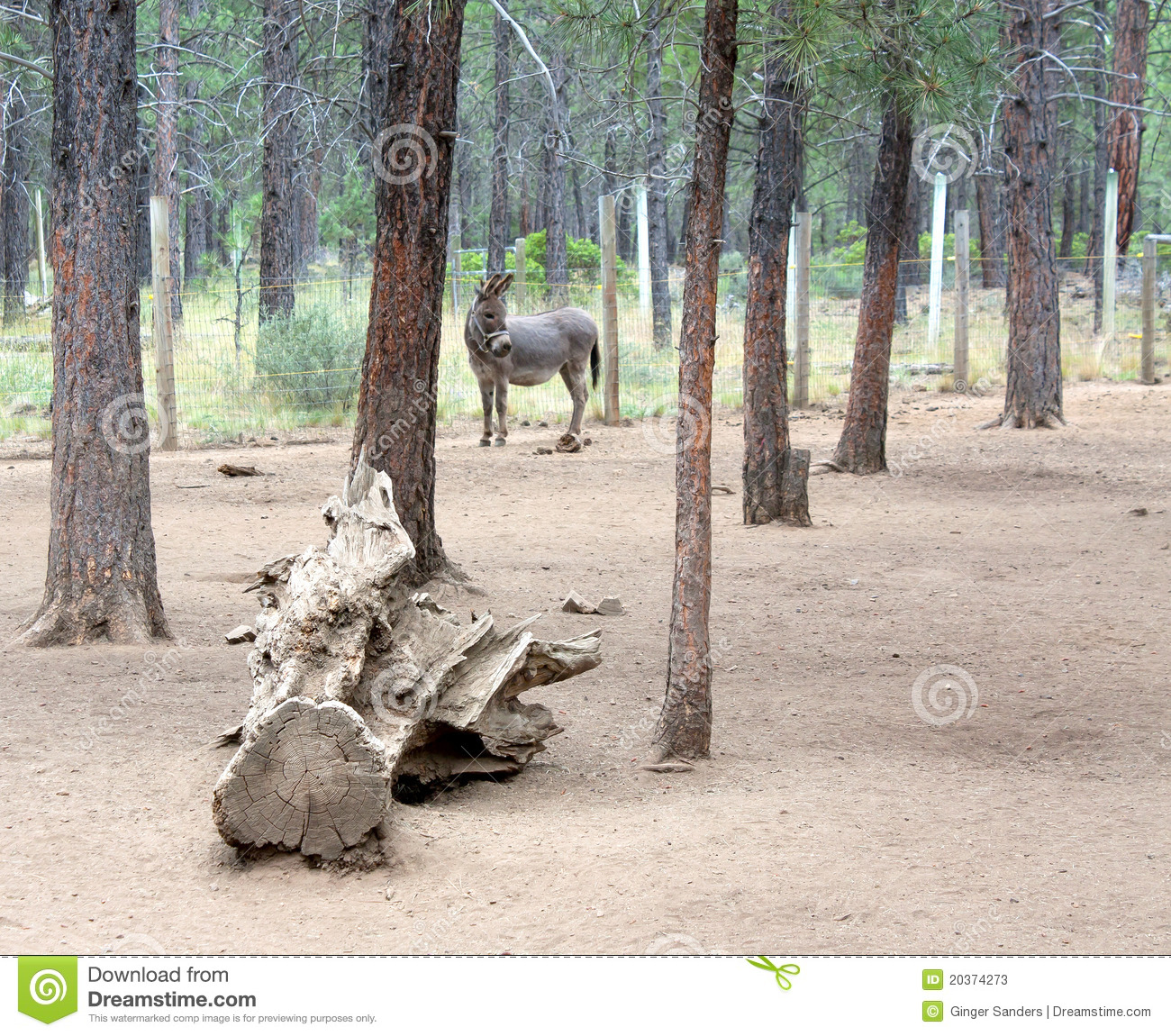 Donkey in the forest