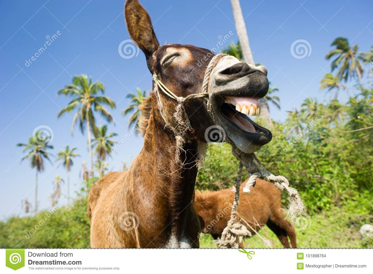 Funny Donkey Laughing Stock Photo | CartoonDealer.com ... - photo#35