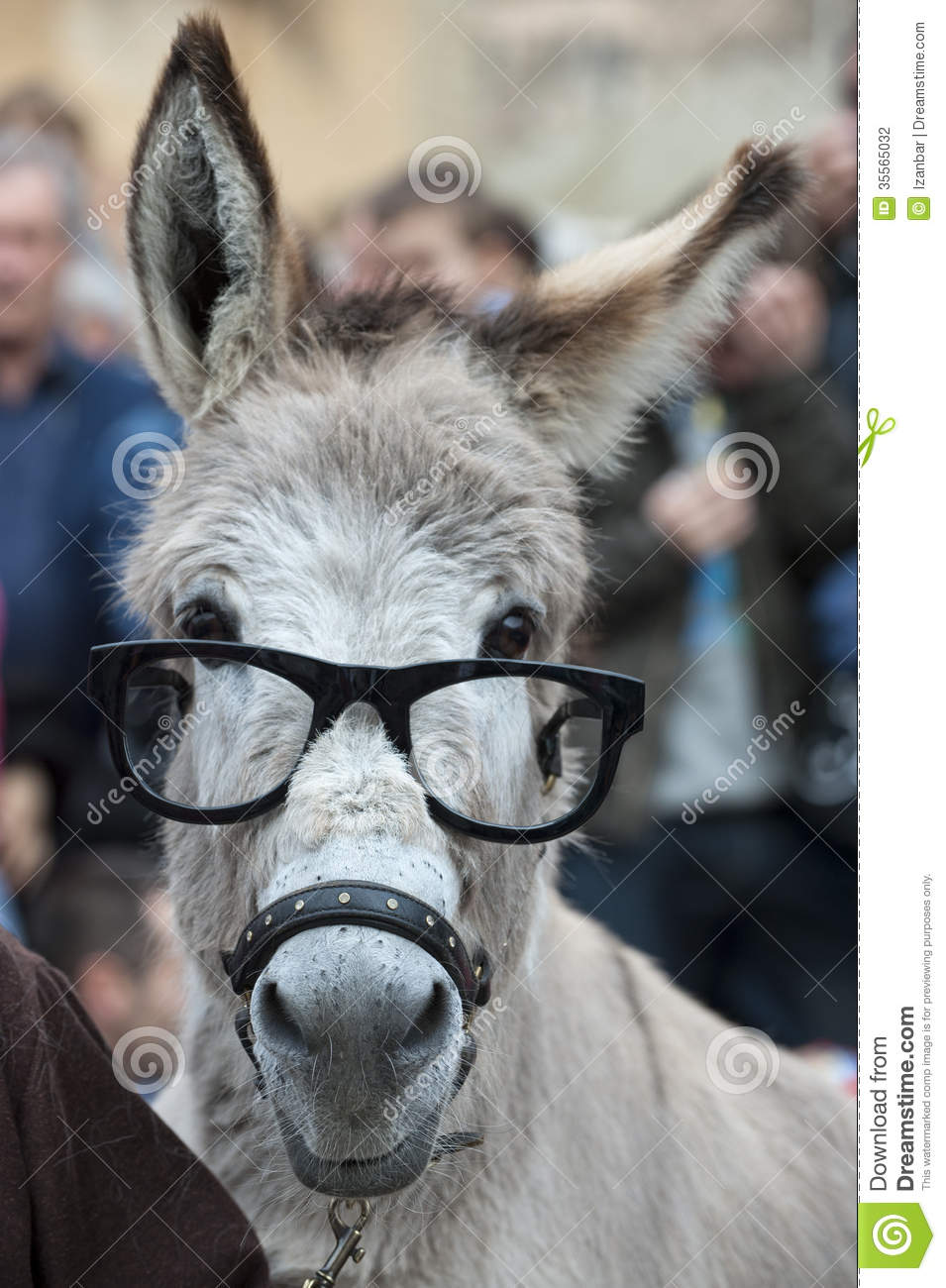 Donkey With Glasses Stock Photography - Image: 35565032