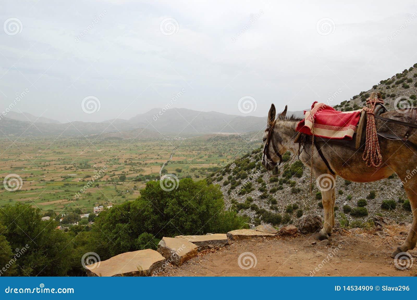Donkey and Lassithi Plateau view