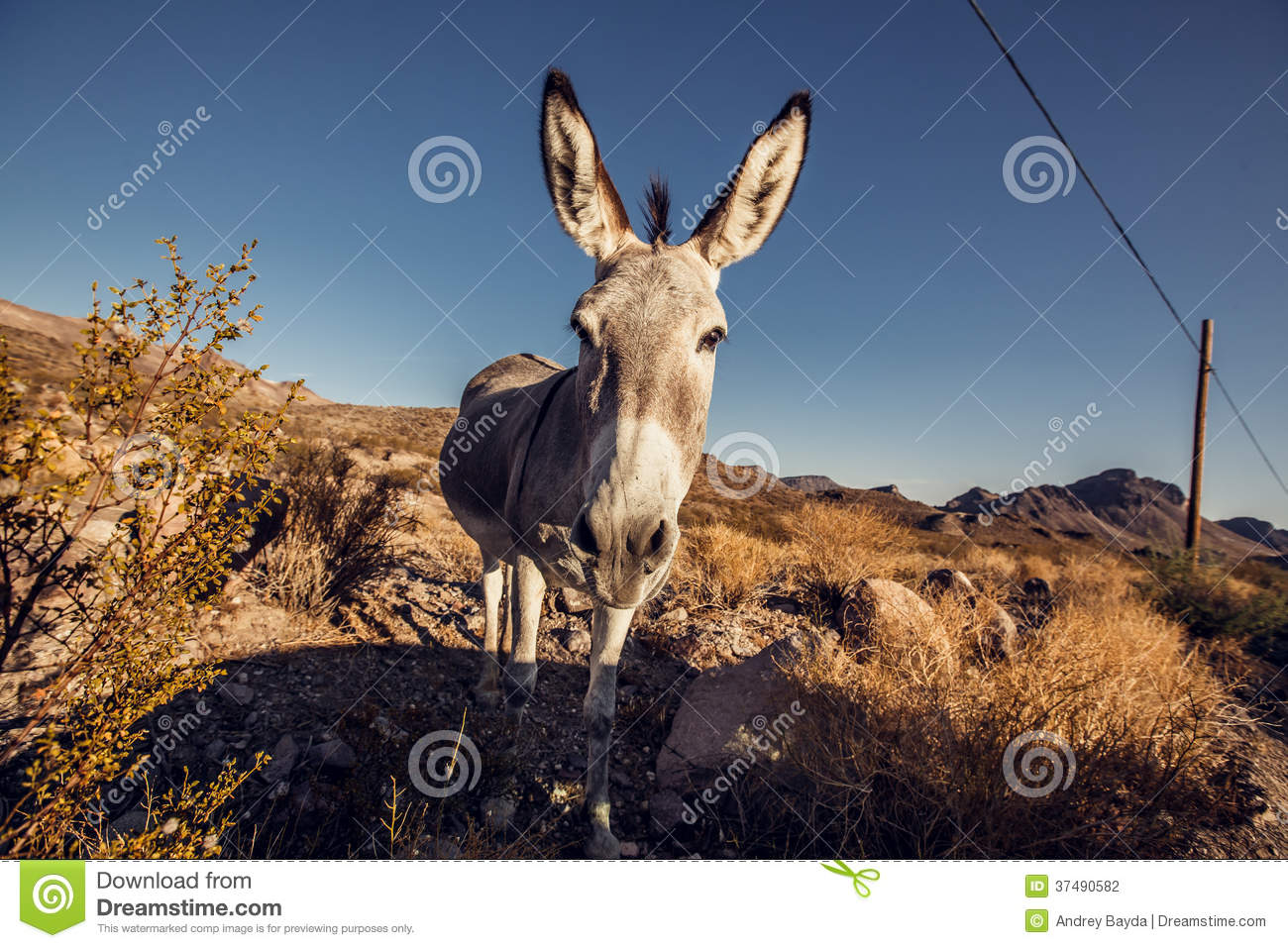 donkey in the mojave desert stock photography image 37490582