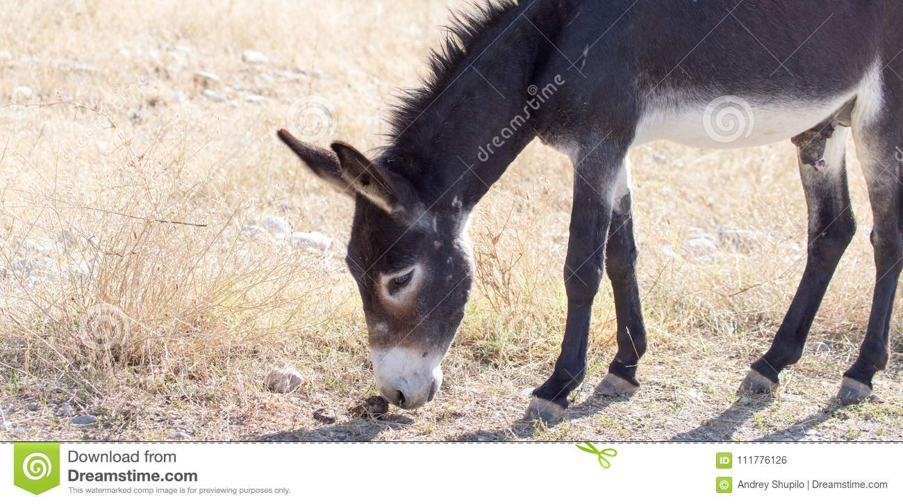 Donkey in a pasture in the fall