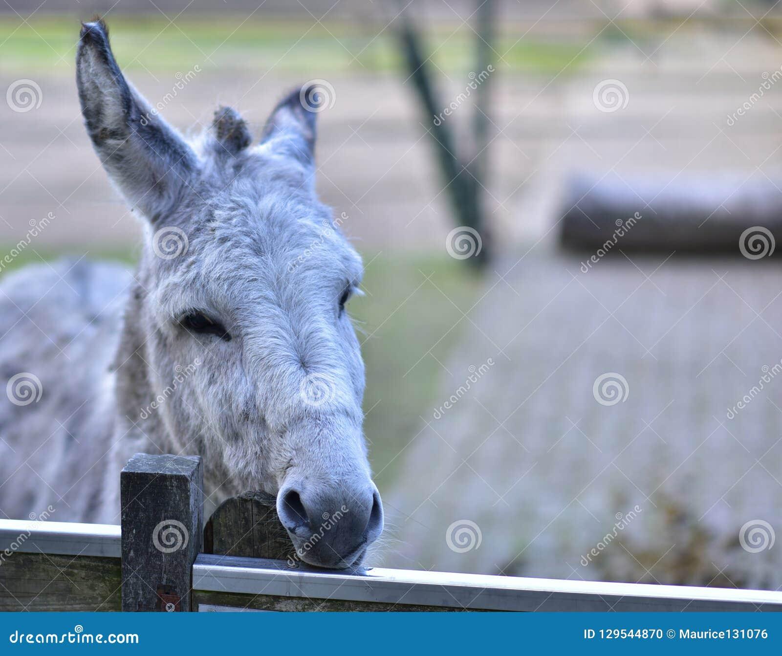 Donkey in public park during autumn season.