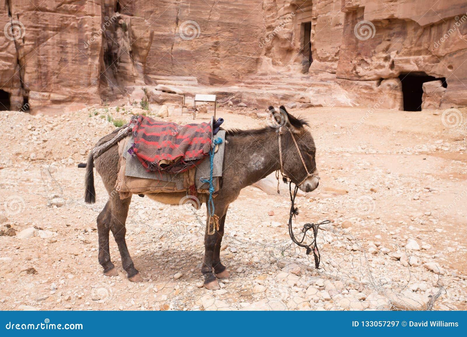 gratis dating sites in Jordanië knuz gratis dating