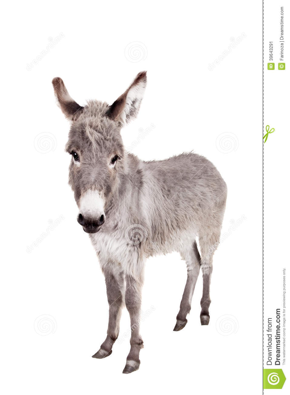 Pretty Donkey isolated on the white background.