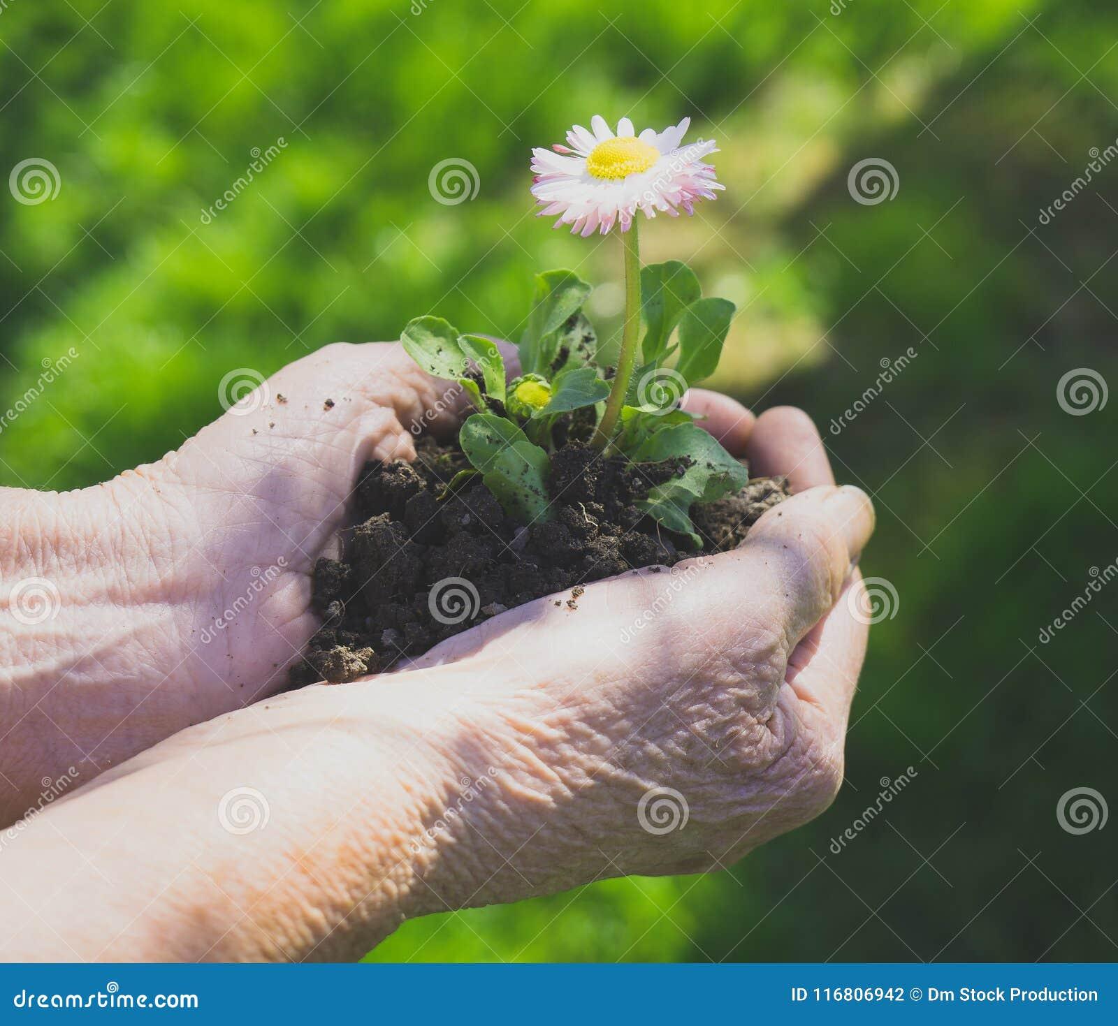 Donna anziana che tiene un fiore