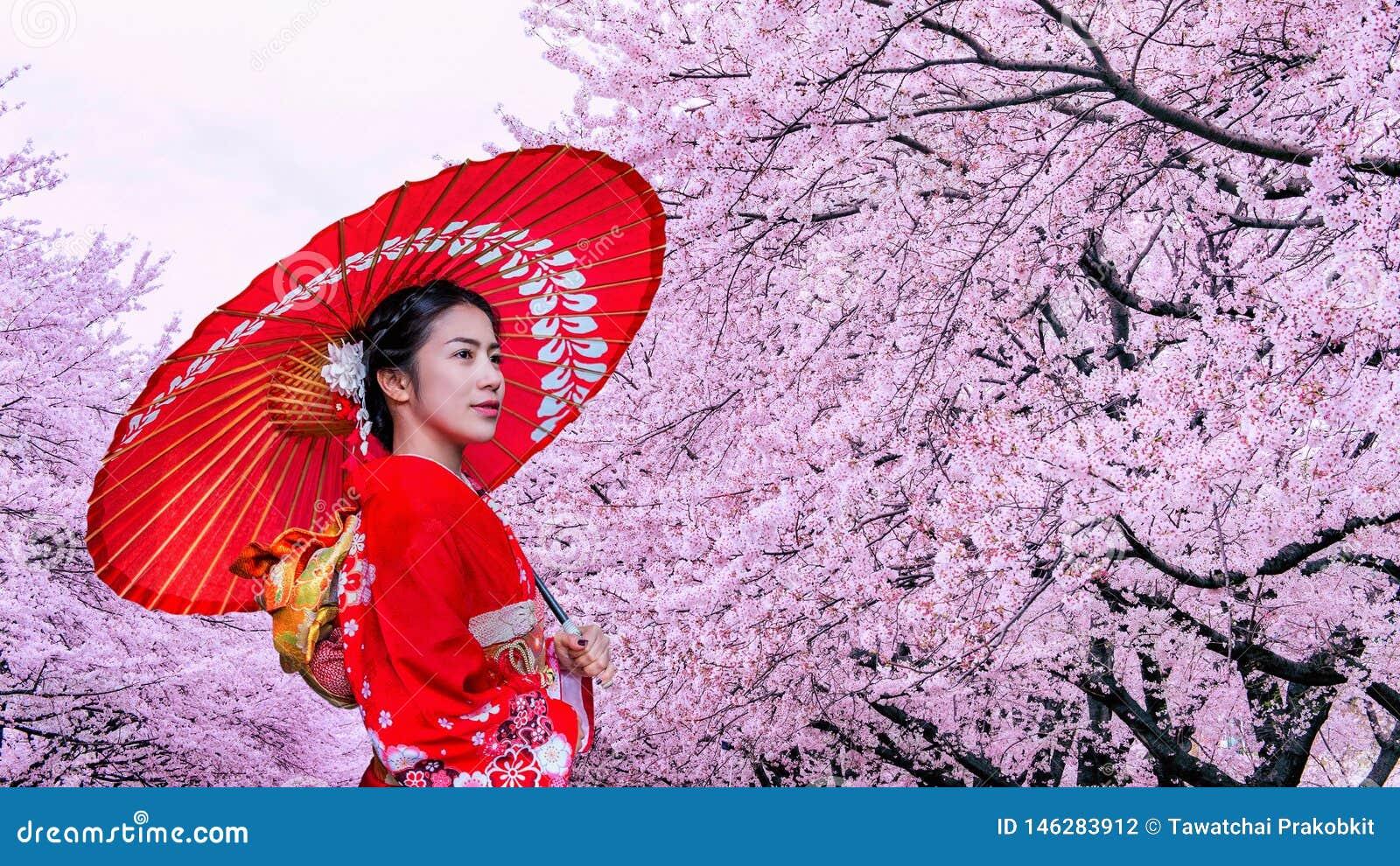 Donna asiatica che indossa il fiore tradizionale giapponese di ciliegia e del kimono in primavera, Giappone