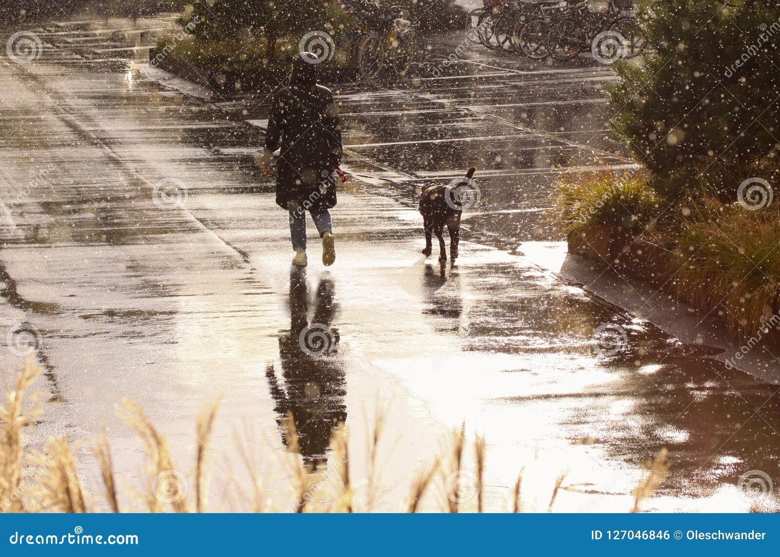 Donna che cammina il cane in tempo piovoso