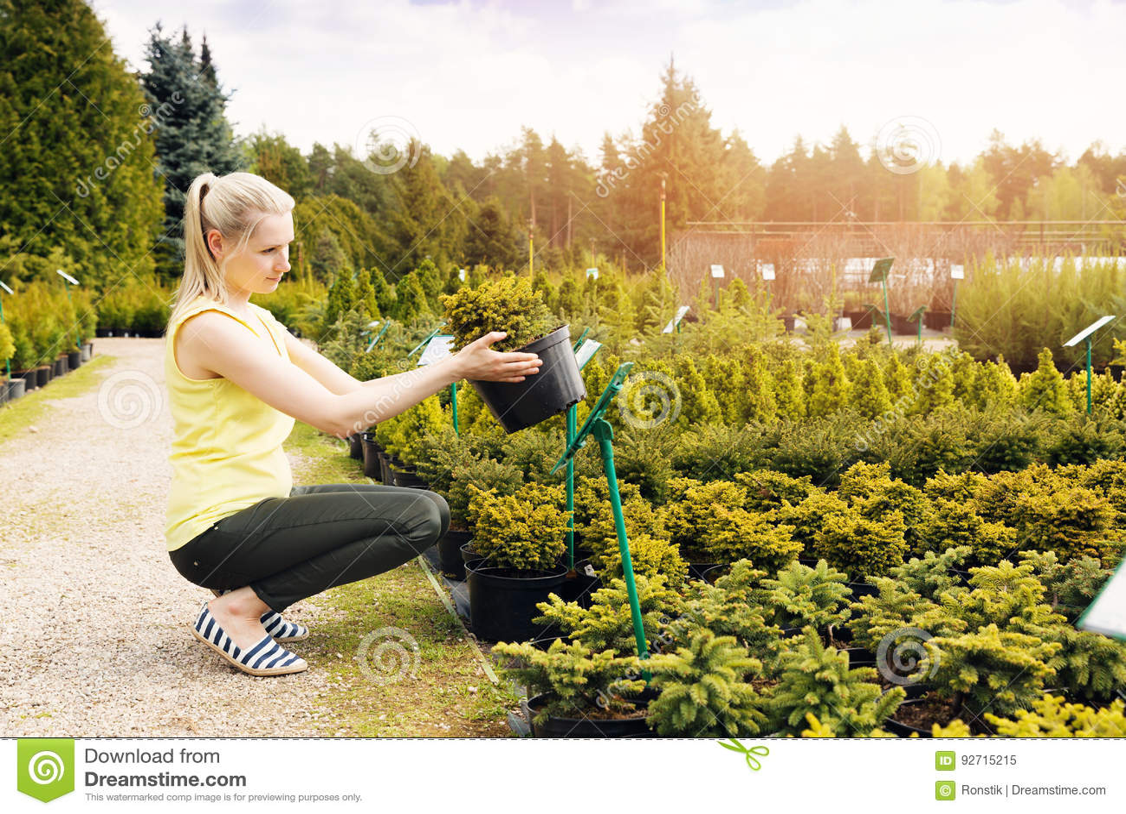 Donna che sceglie l albero ornamentale della conifera alla scuola materna all aperto della pianta