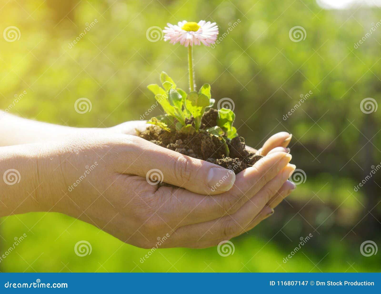 Donna che tiene un fiore