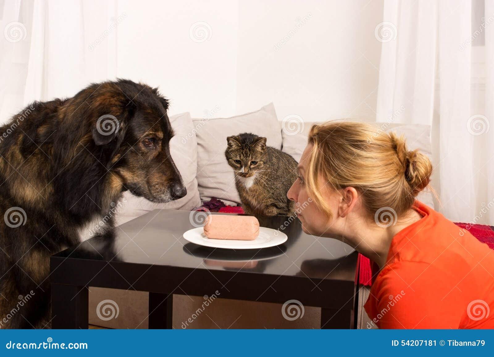 Donna del gatto del cane