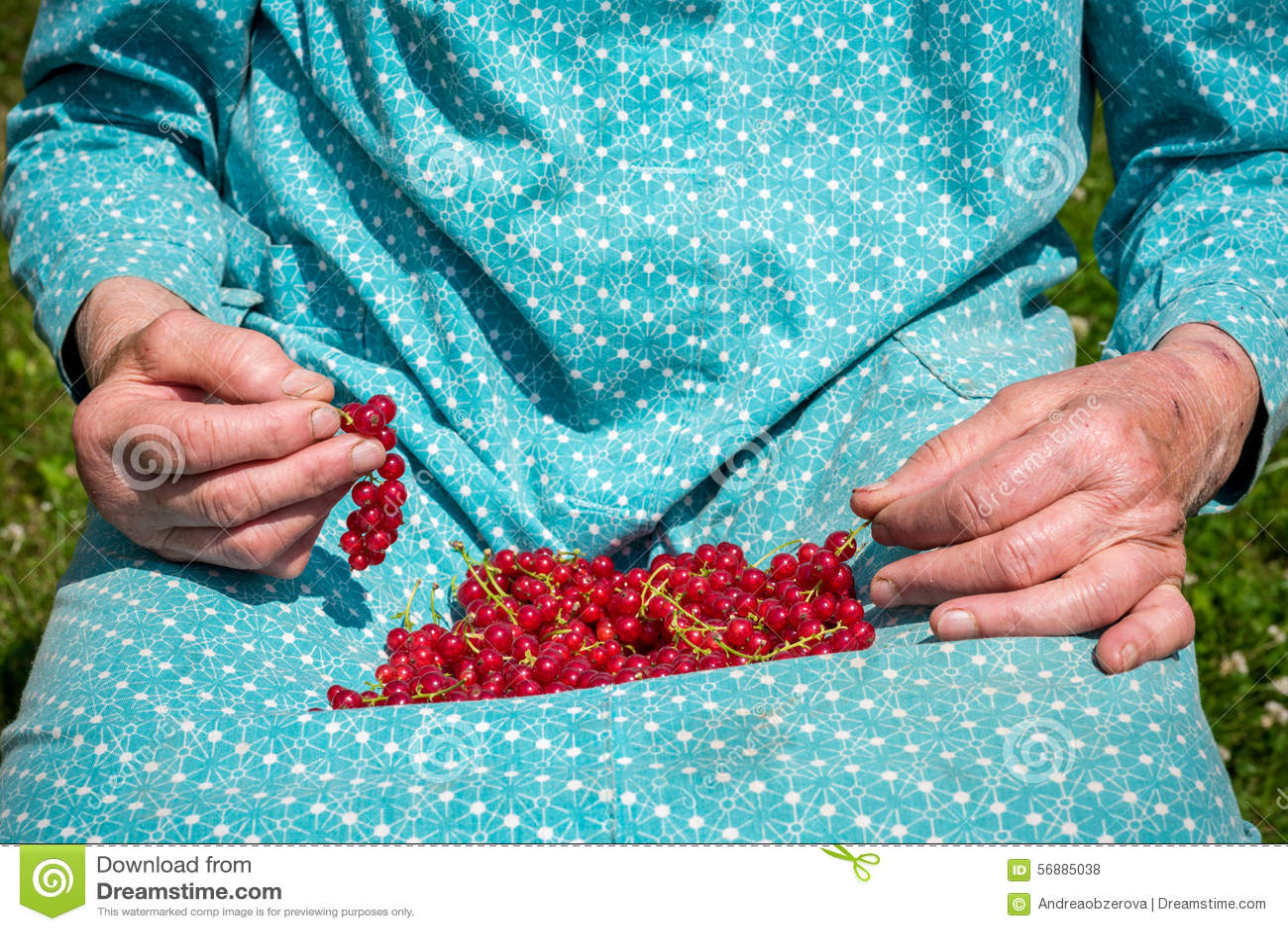 Donna senior in suoi giardino e ribes nostrani