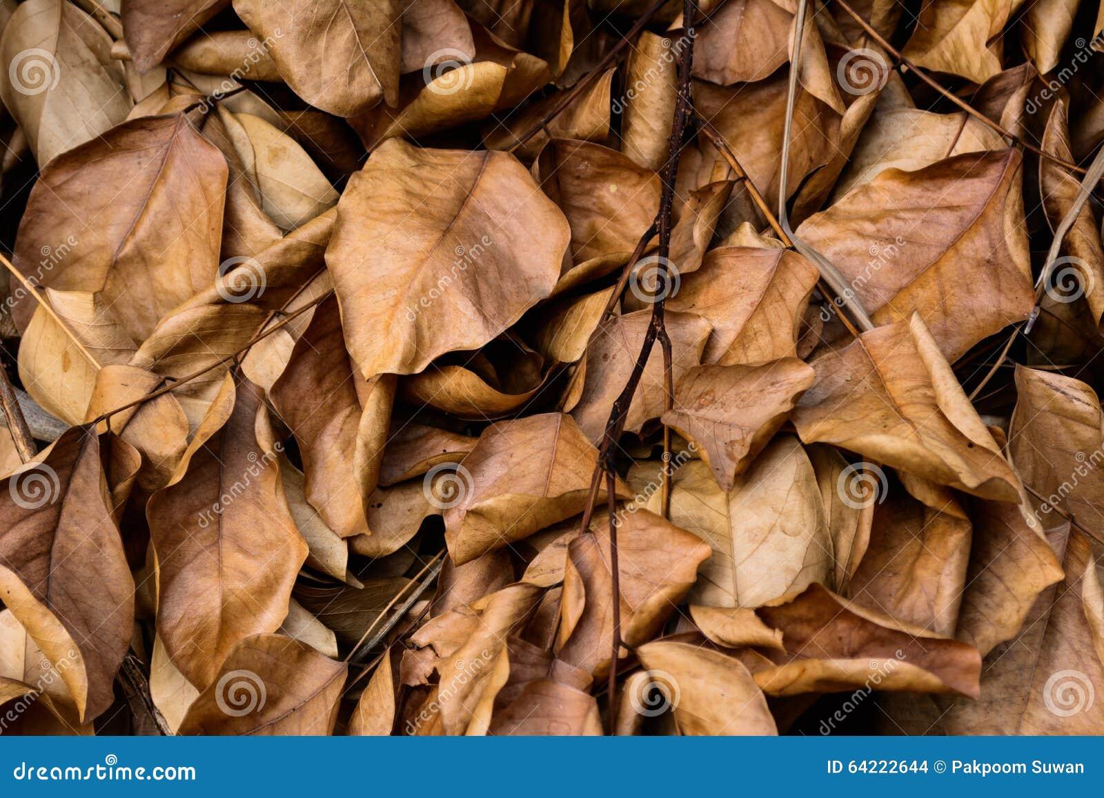 Dood bladeren geschoten ideaal voor achtergrondtexturen
