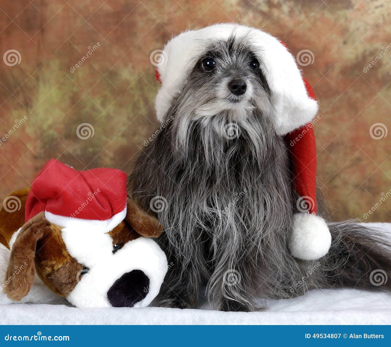 Doof Weihnachtshund stockbild. Bild von welpe, dekorationen - 49534807