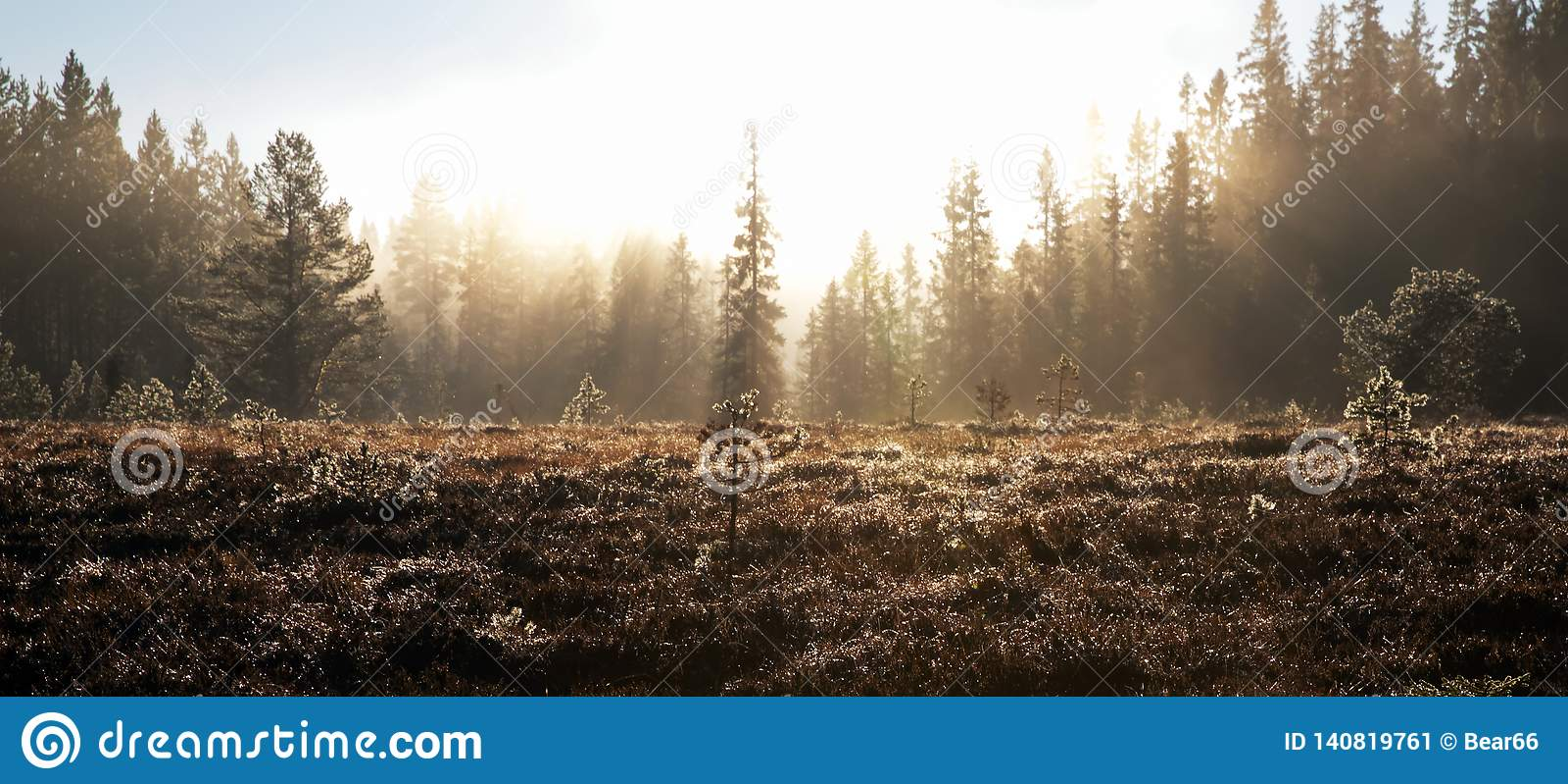 Dopheide en bos in mist wordt gehuld die