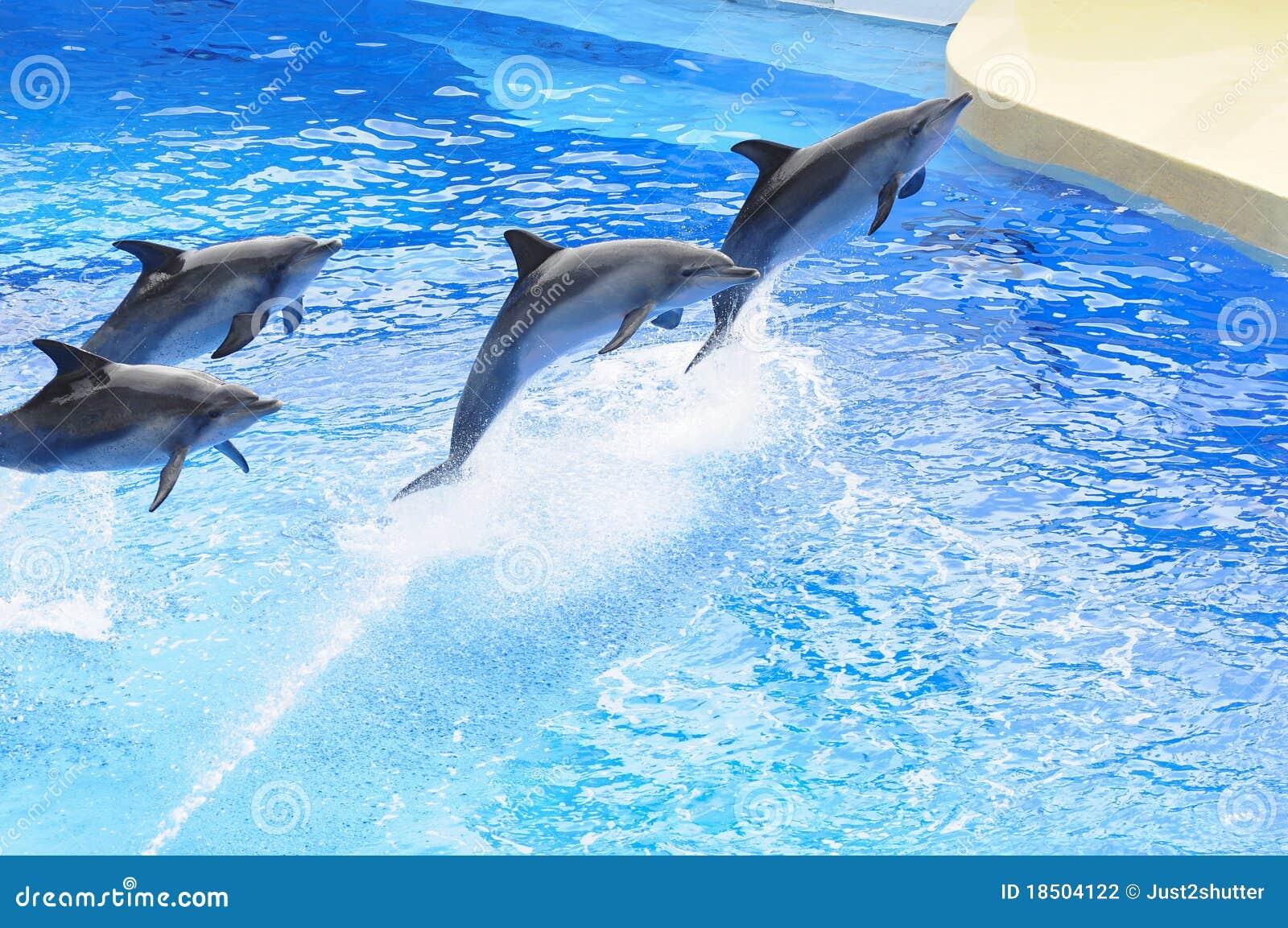 Dophin εμφανίστε