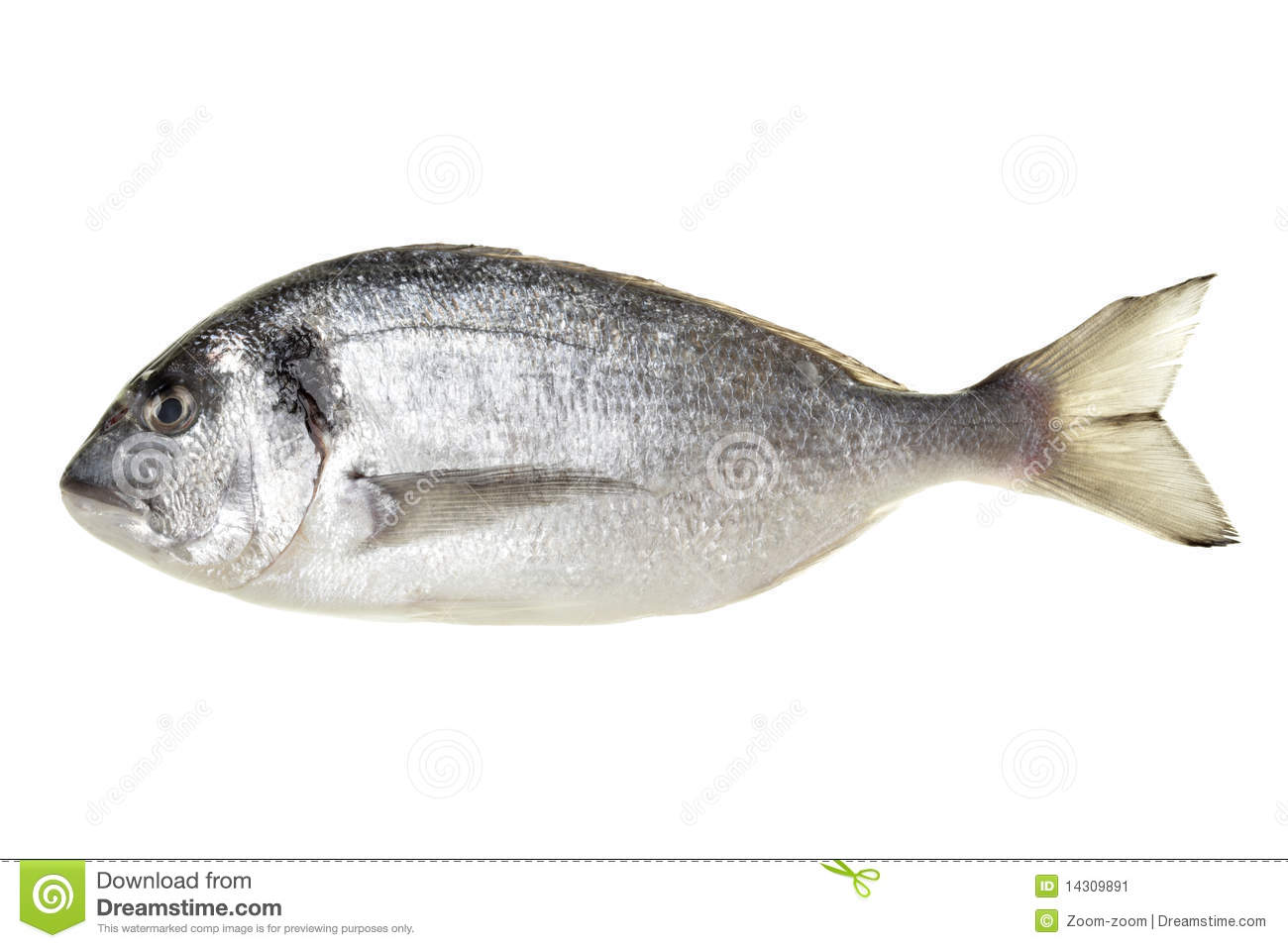 Dorada fish stock image image of head closeup food for Image of fish